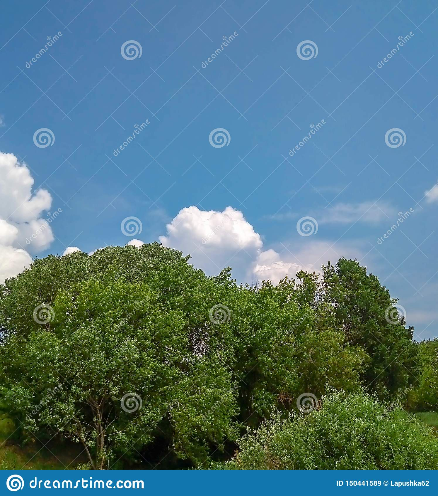 Обнаженные облака и лес неба