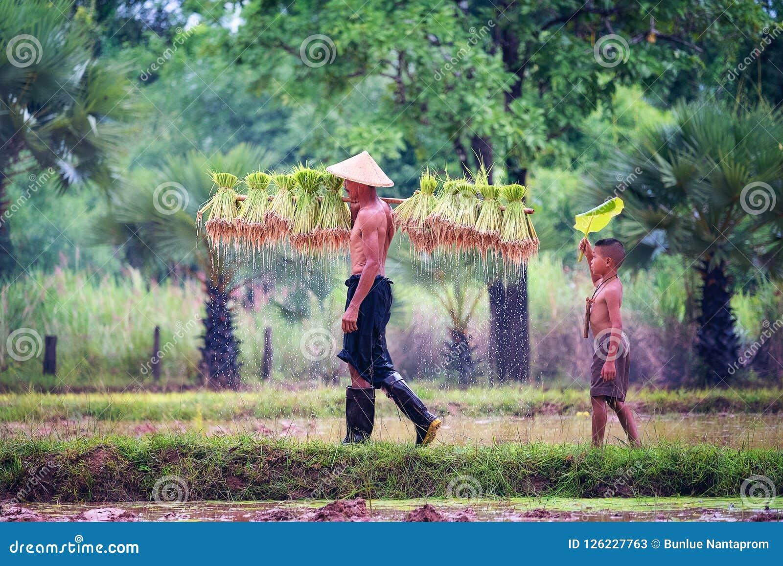Образ жизни юговосточных азиатских людей в сельской местности Tha поля