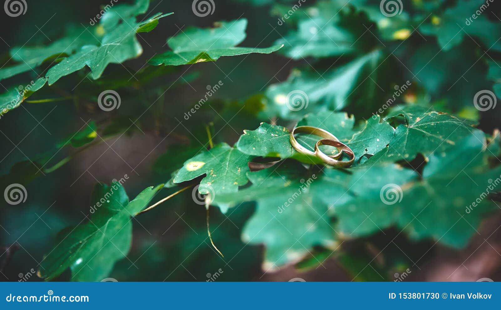 Обручальные кольца свадьбы символ любов и преданности
