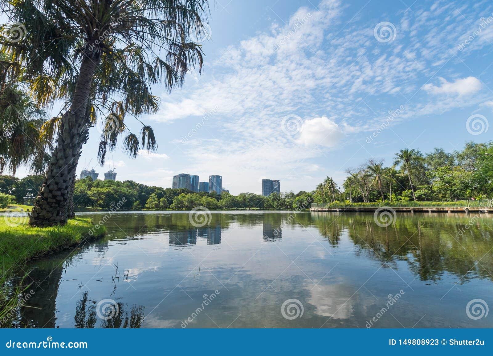 Общественный парк в большом городе Концепция места и outdoors Тема природы и ландшафта Положение Бангкока Таиланда