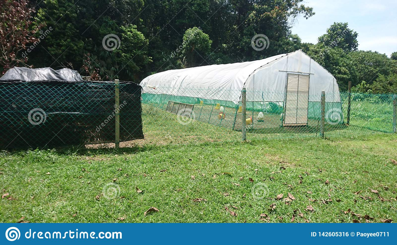 Общие простые шатры цыпленка