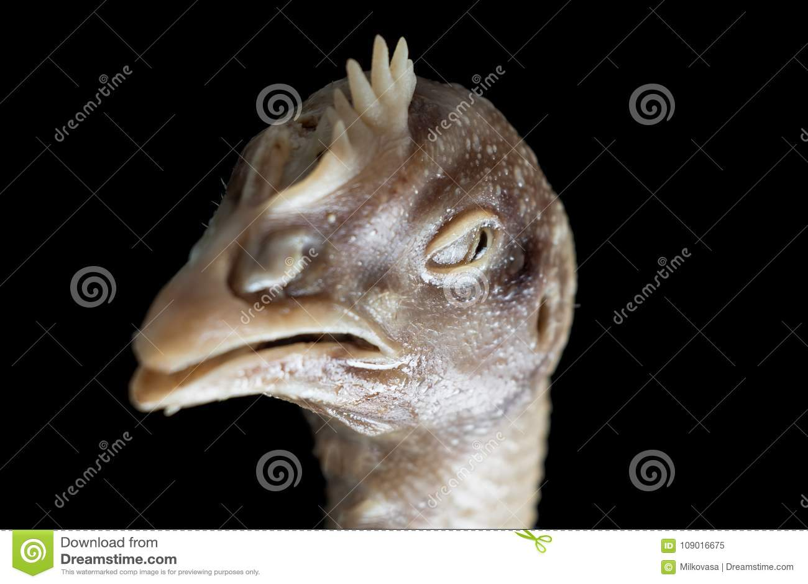 общипанная курица фото