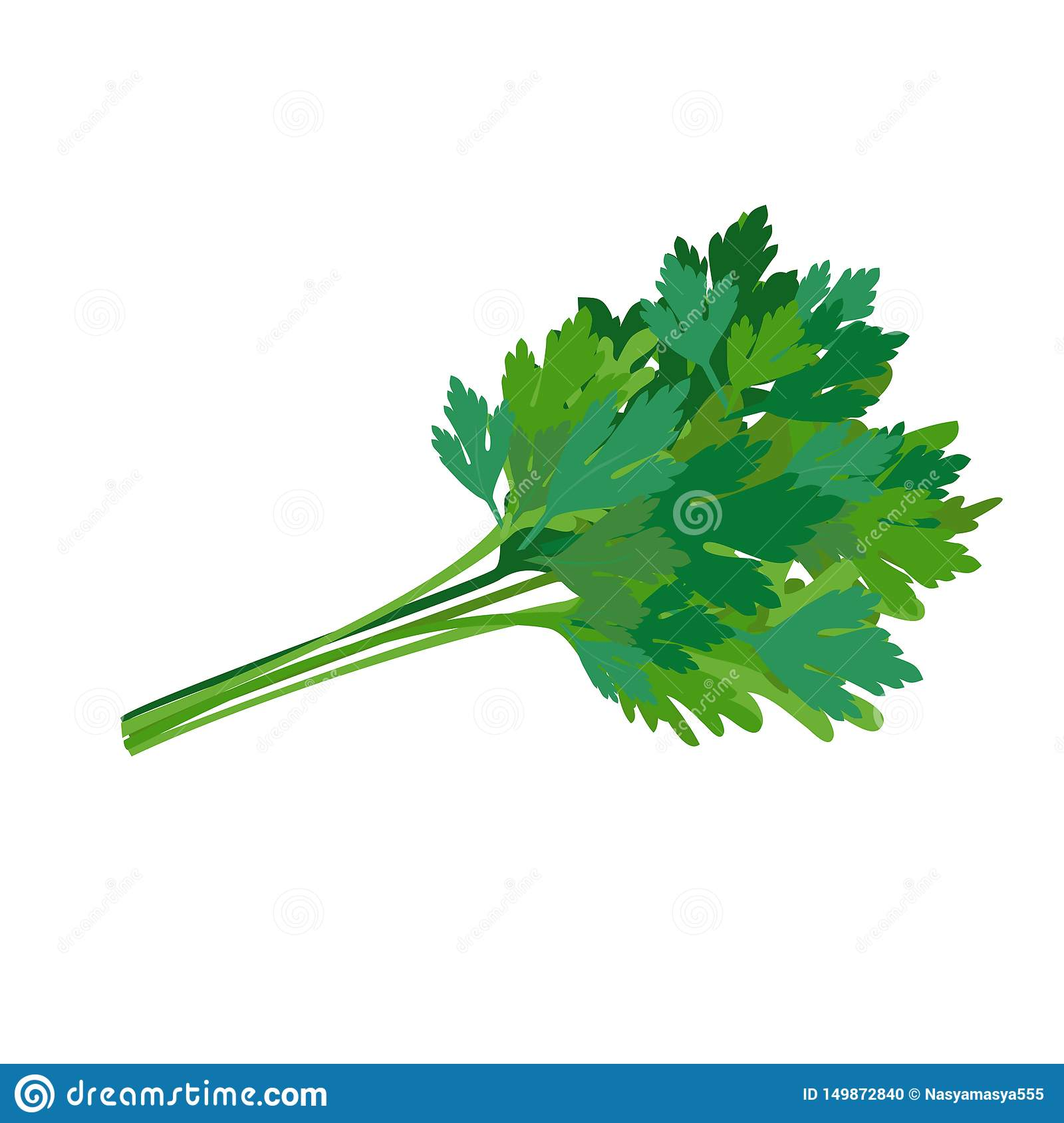 Fresh green parsley. Spicy seasoning. Vector illustration.