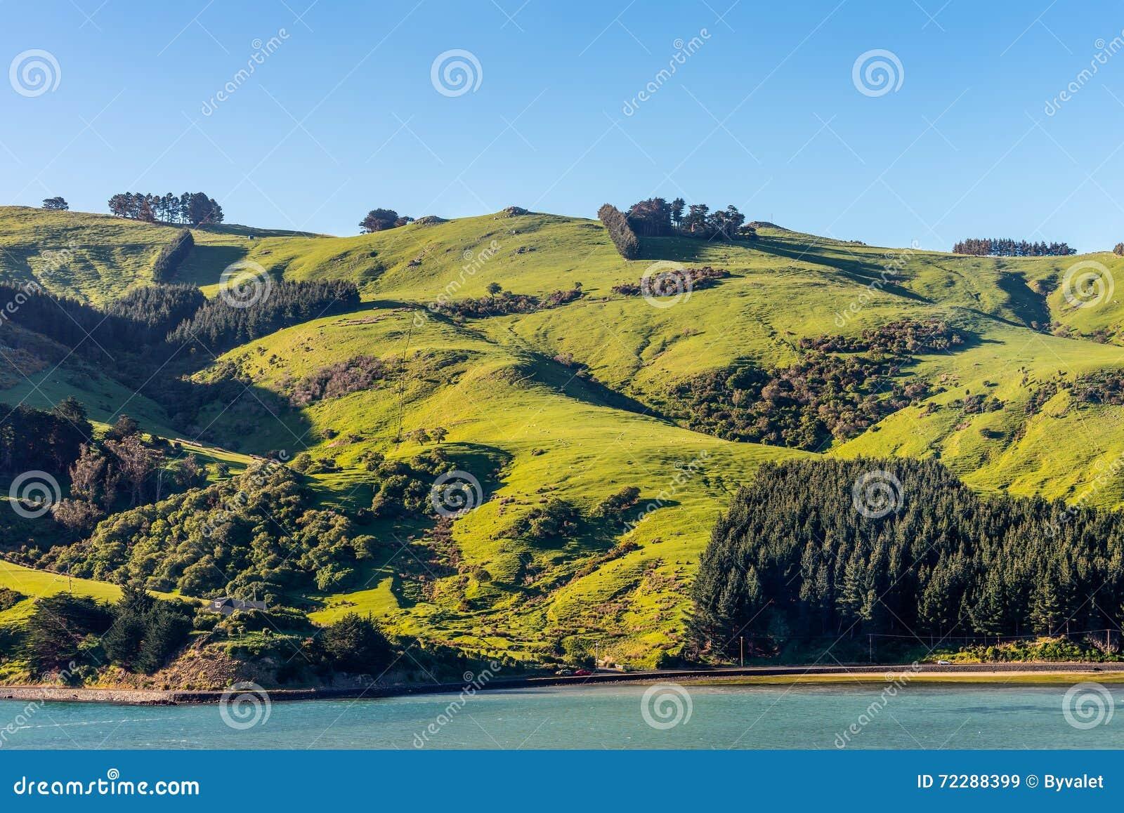 Download Овцы и выгоны в Новой Зеландии Стоковое Изображение - изображение насчитывающей отечественно, табун: 72288399