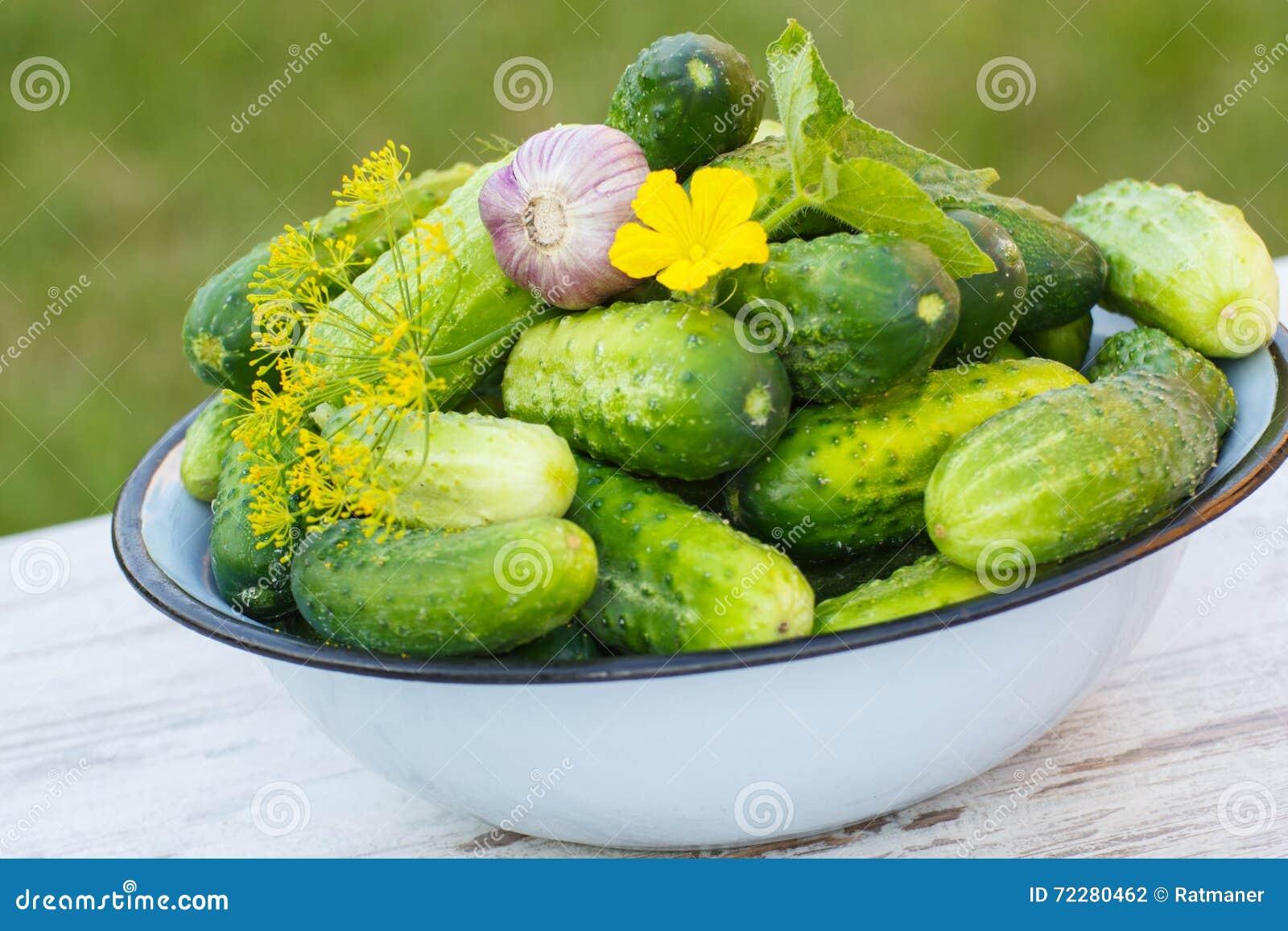 Download Огурцы, чеснок и укроп в шаре металла в саде на солнечный день Стоковое Фото - изображение насчитывающей чеснок, надушено: 72280462