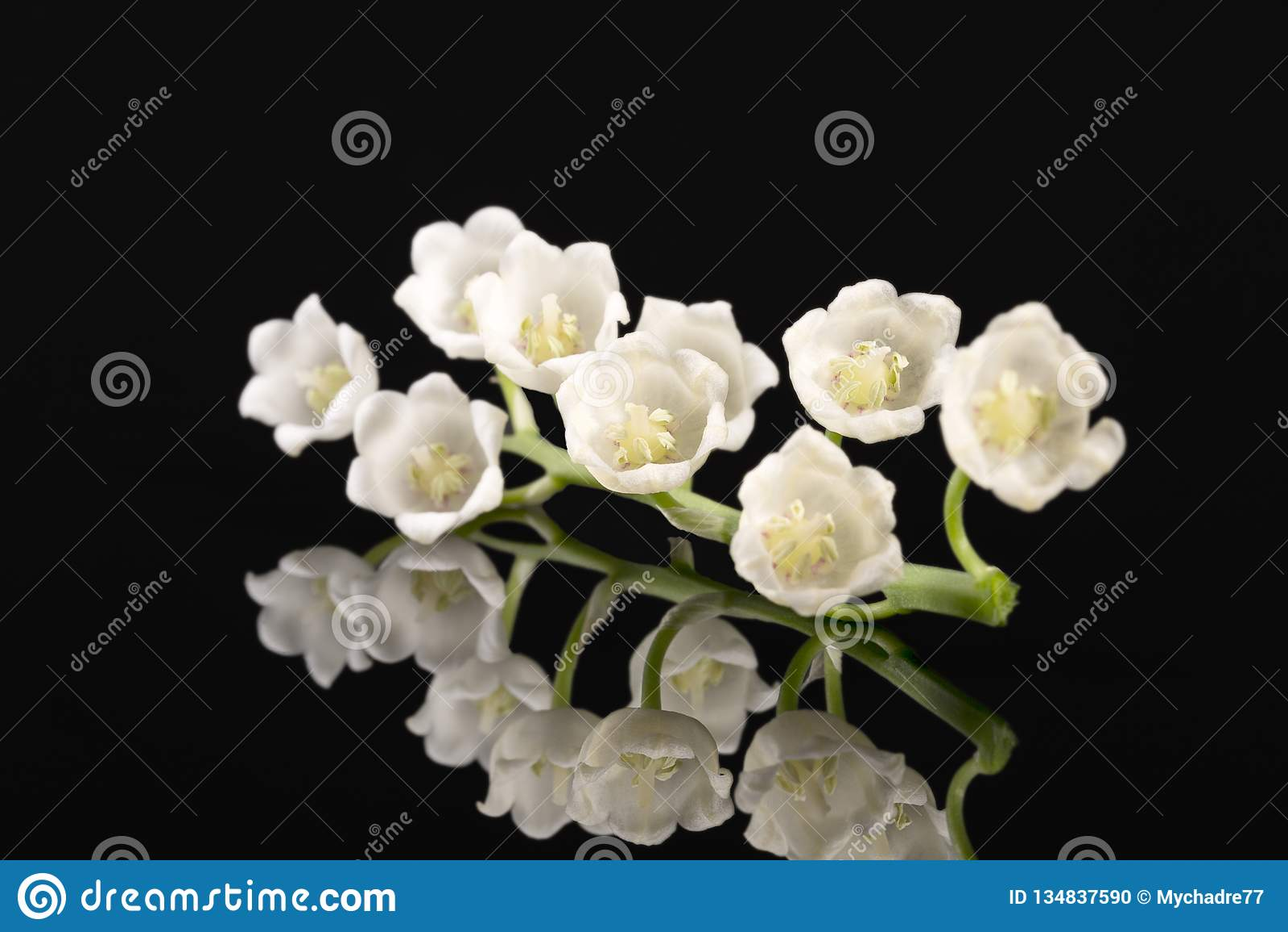 Одиночная хворостина цветков весны ландыша изолированных на черной предпосылке