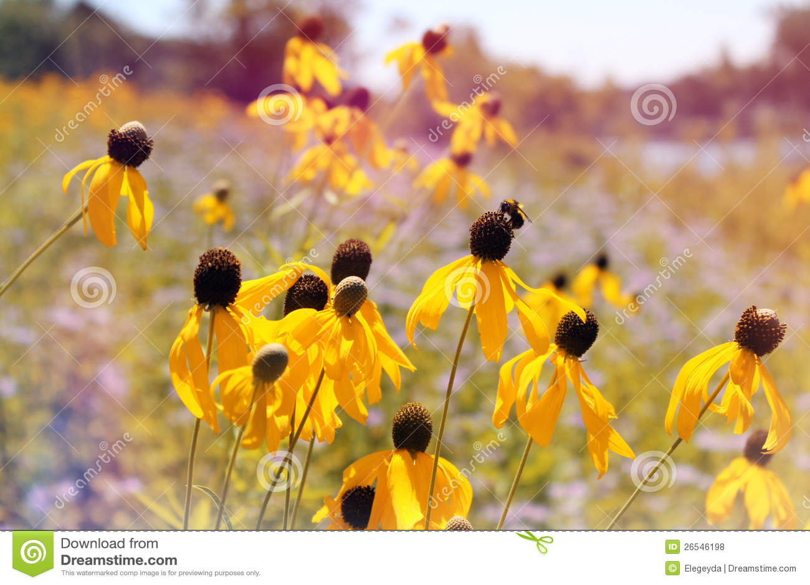 Одичалые желтые цветки