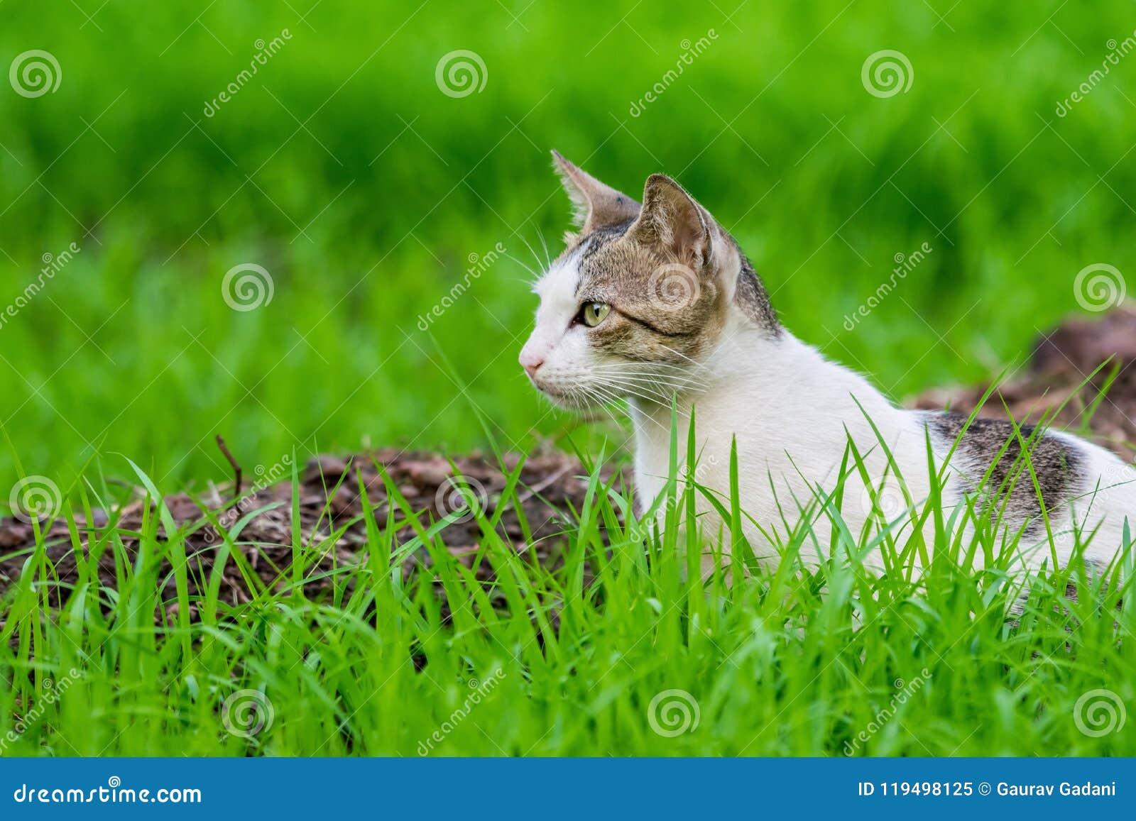 Одичалый кот ждать в траве покрыл поле