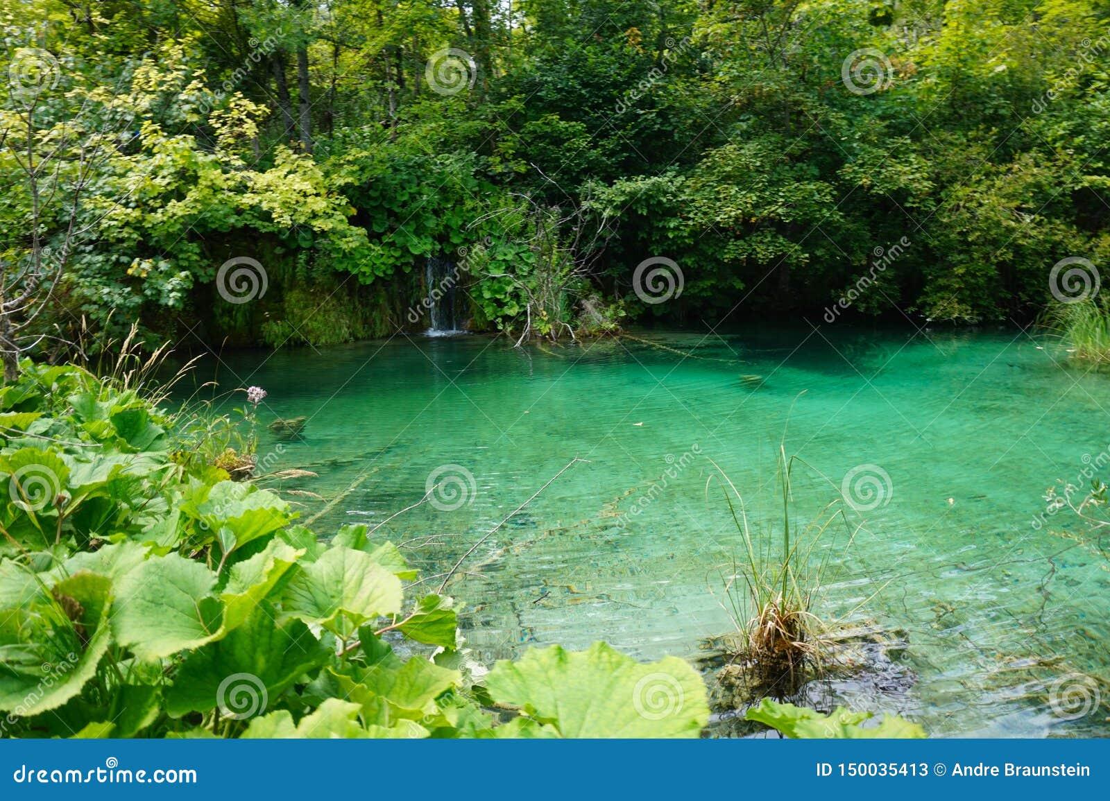 Озера национальная Парк-Хорватия Plitvice Красивый пруд на солнечном после полудня лета