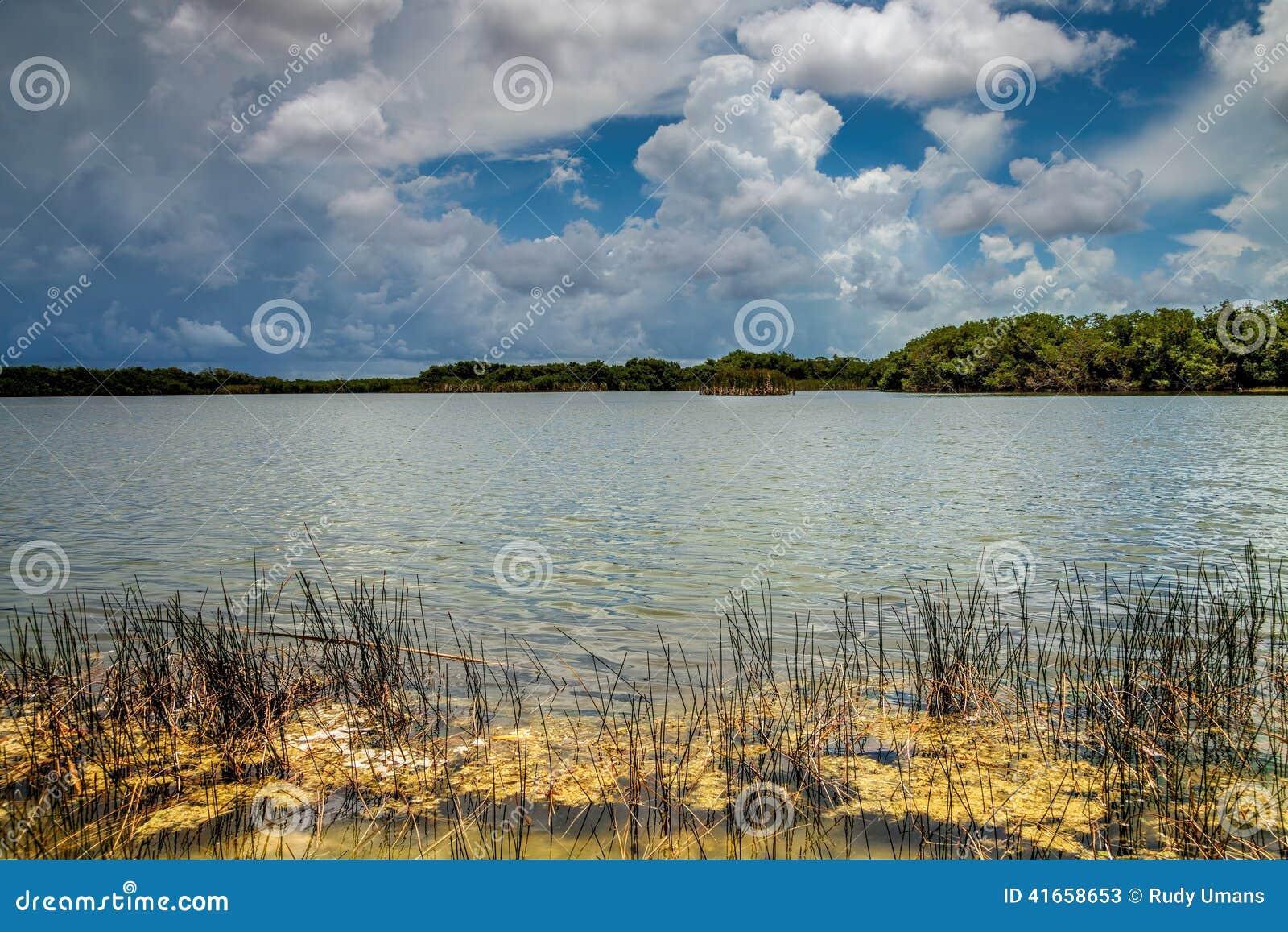 Озеро болотистая низменность