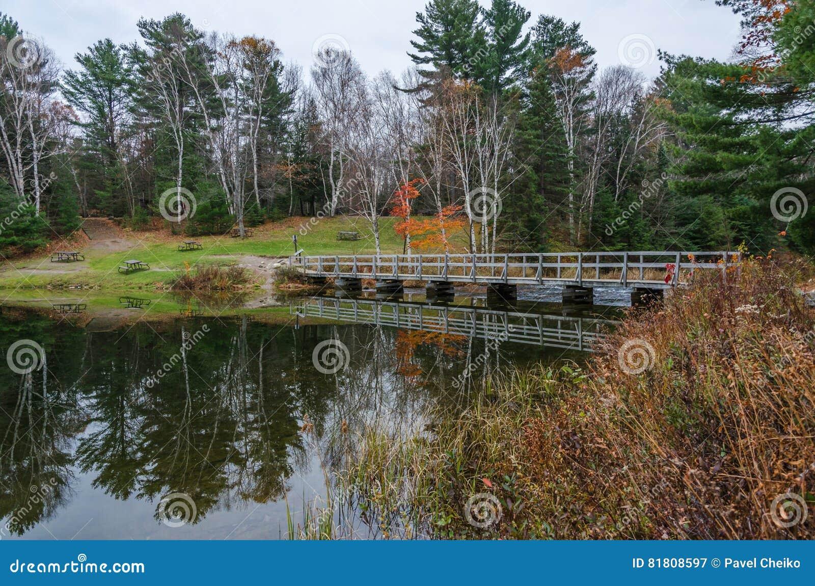 Озеро лес
