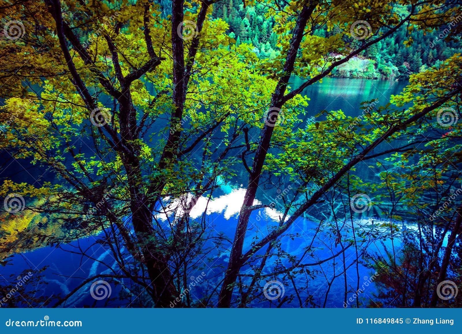 Озеро и деревья в Jiuzhaigou Valley, Сычуань, Китае
