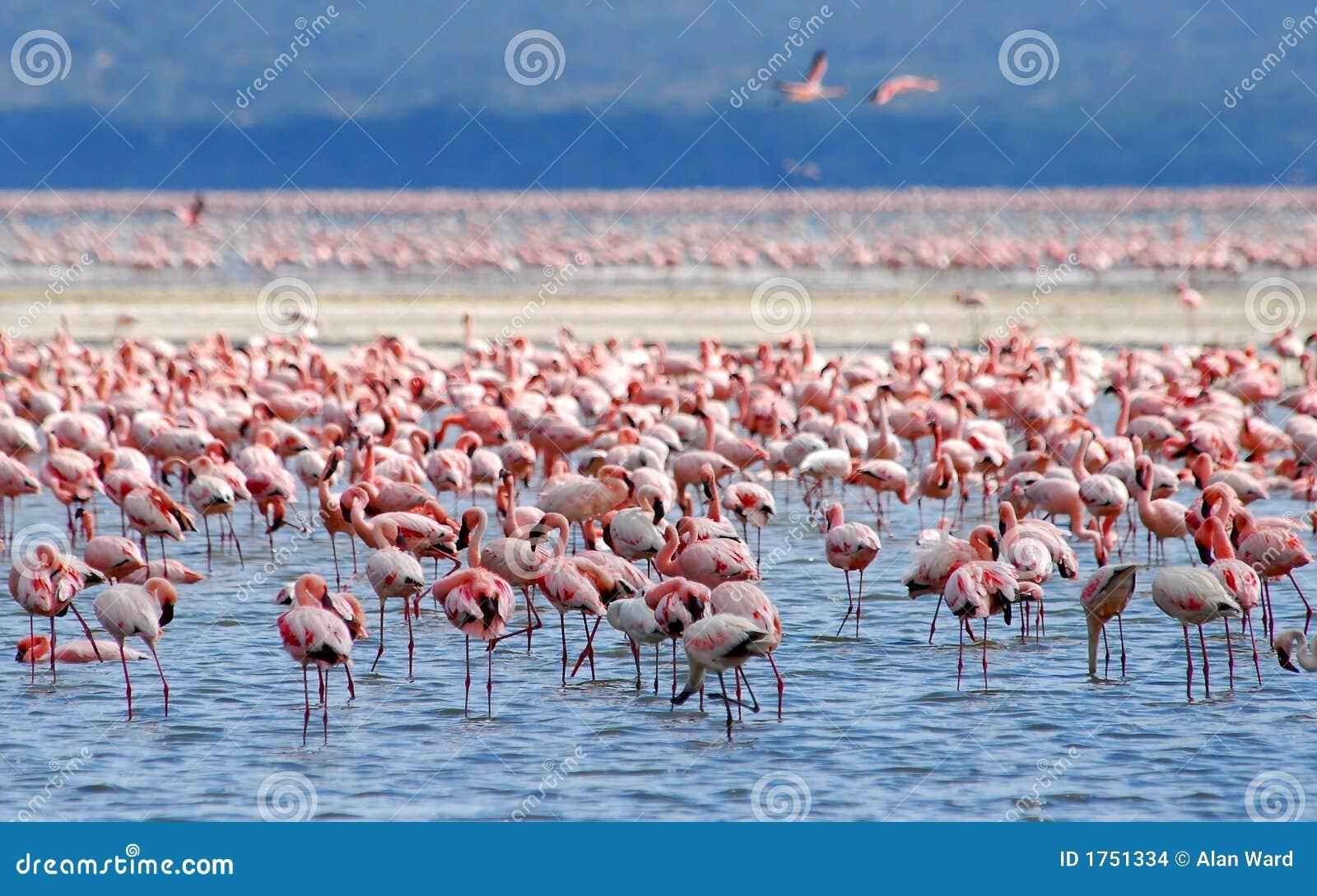 озеро фламингоа