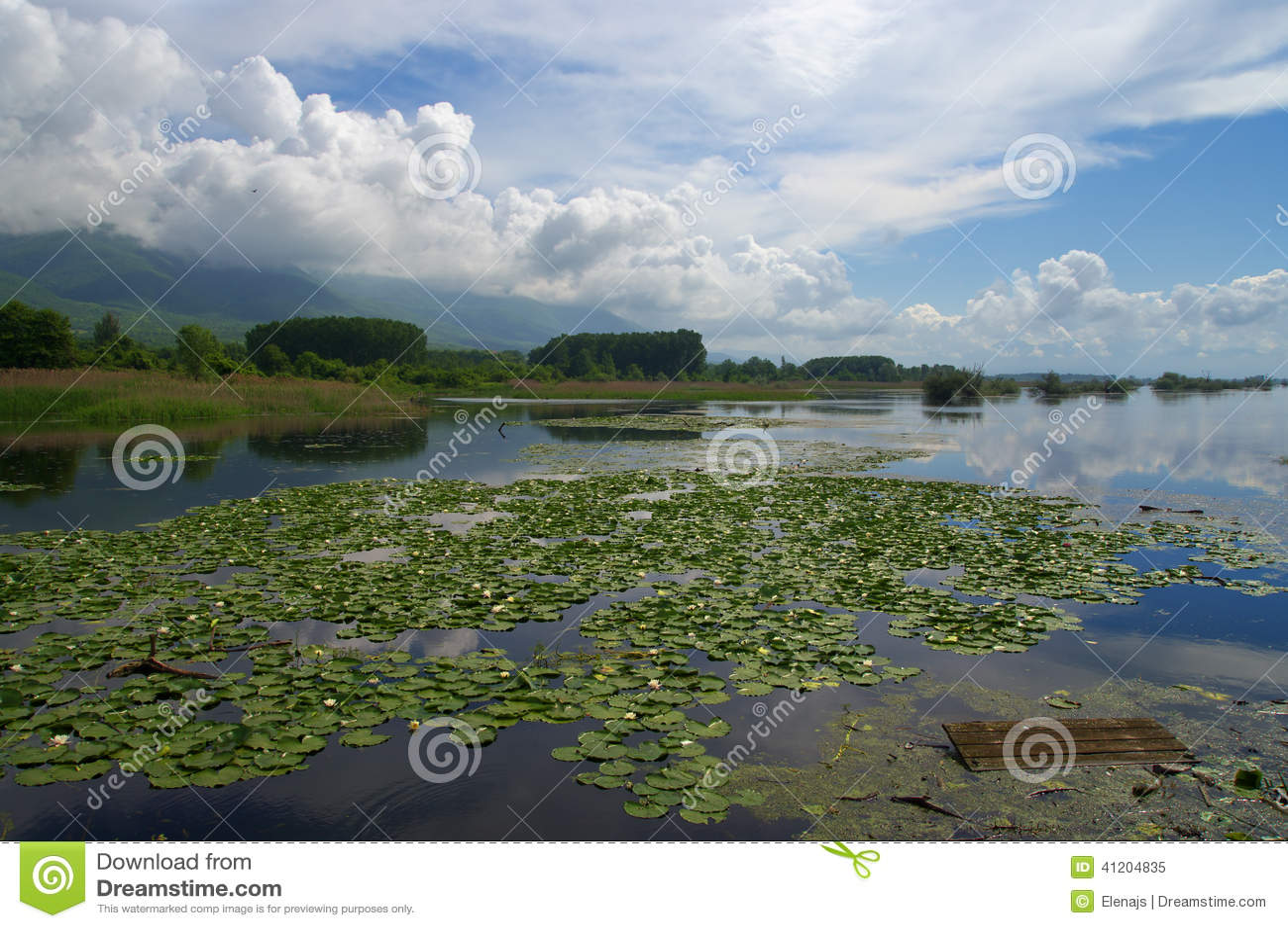 Озеро Kerkini во время предыдущей весны с лилией воды