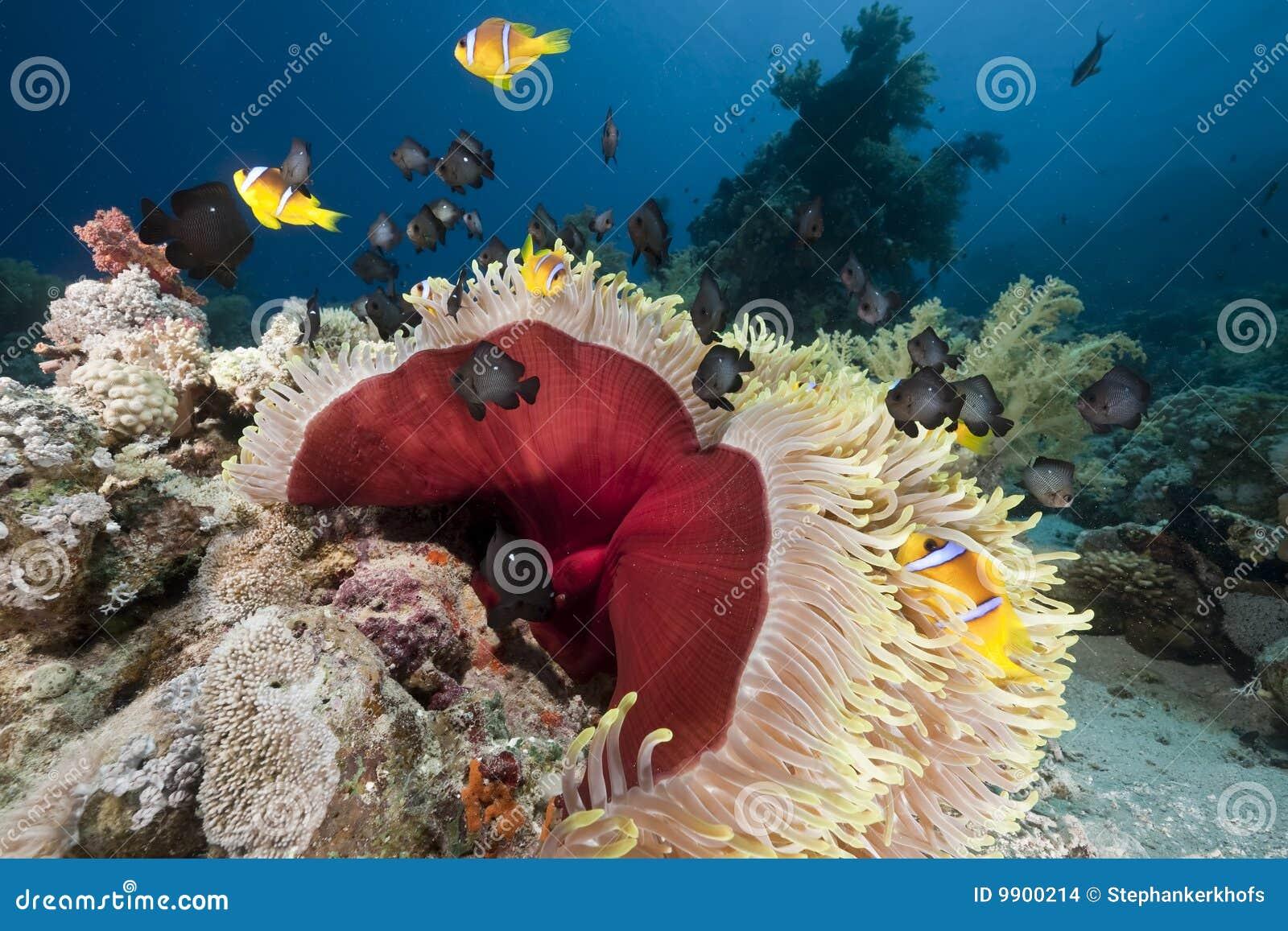 океан коралла ветреницы