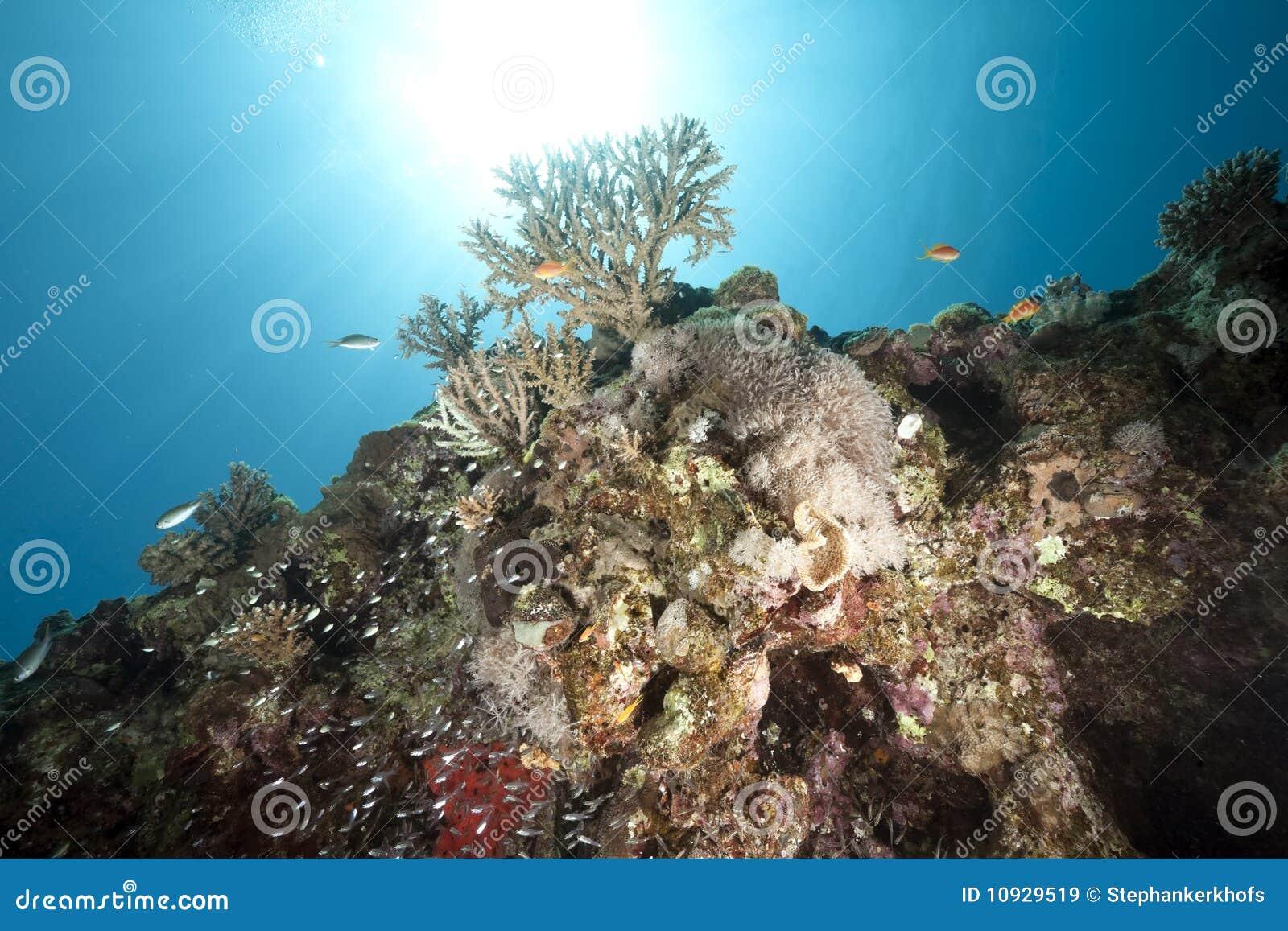 океан рыб