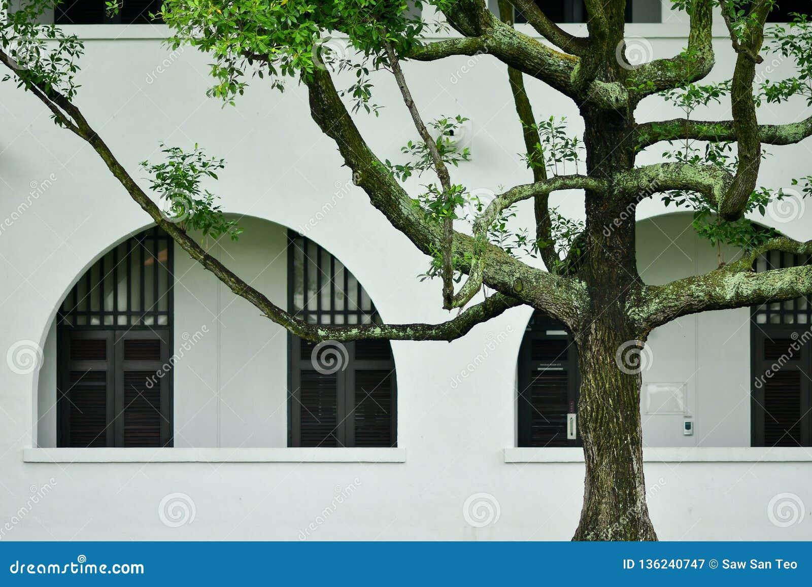 Окна великобританского дома колонии белые голубые
