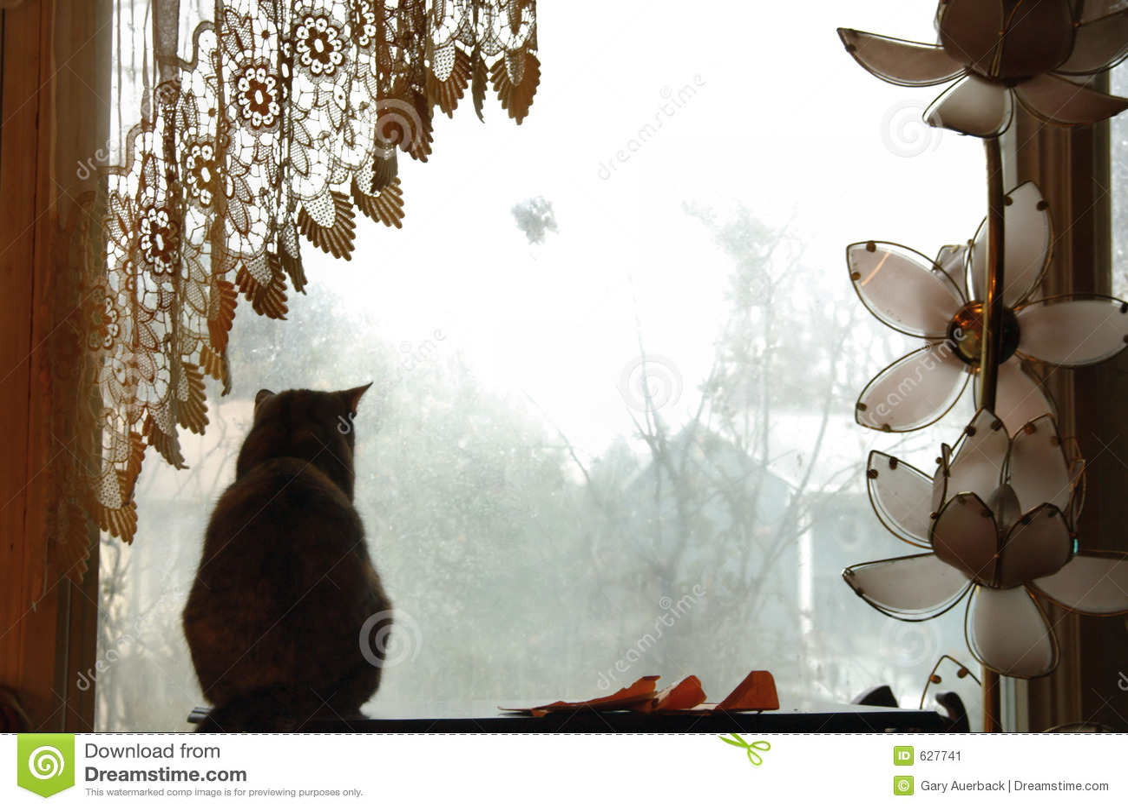 Download окно кота стоковое изображение. изображение насчитывающей peering - 627741