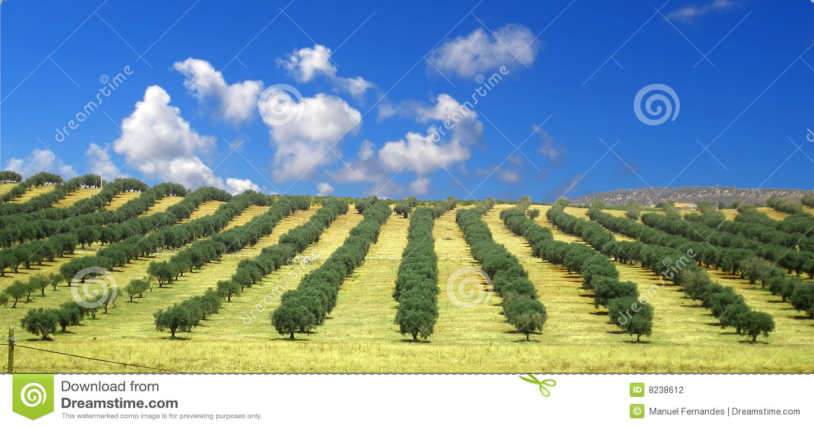 изображение оливкового дерева: