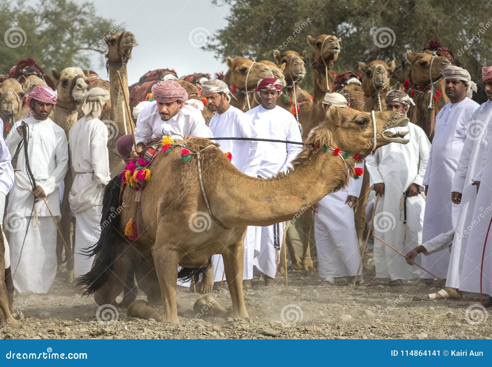 Оманские люди получая готовый участвовать в гонке их верблюды на пылевоздушной стране