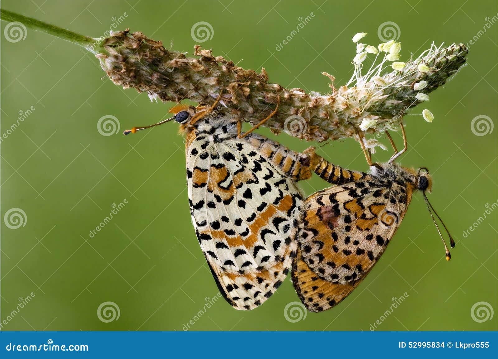 Секс с бабочкой