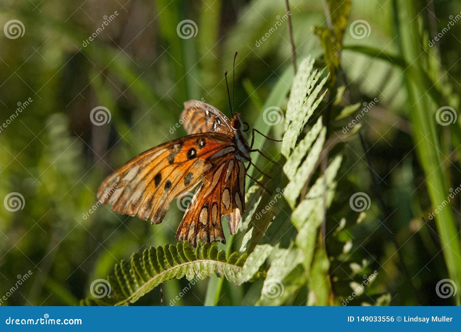 Оранжевая бабочка со сломленным крылом