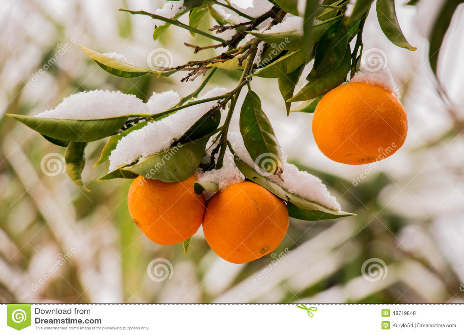 Оранжевая утеха
