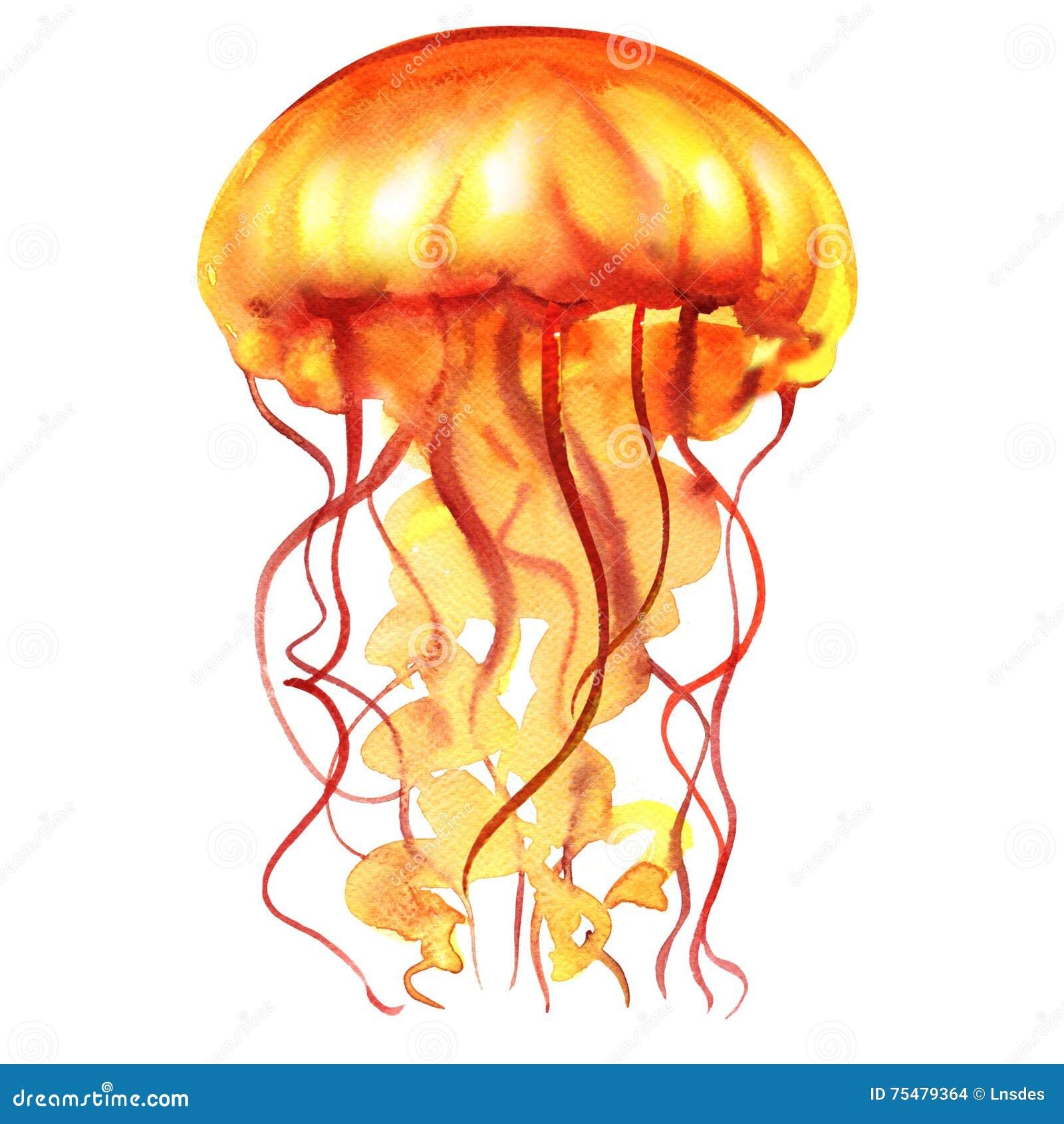 Оранжевые медузы воды океана, изолированная Медуза, морская жизнь, иллюстрация акварели