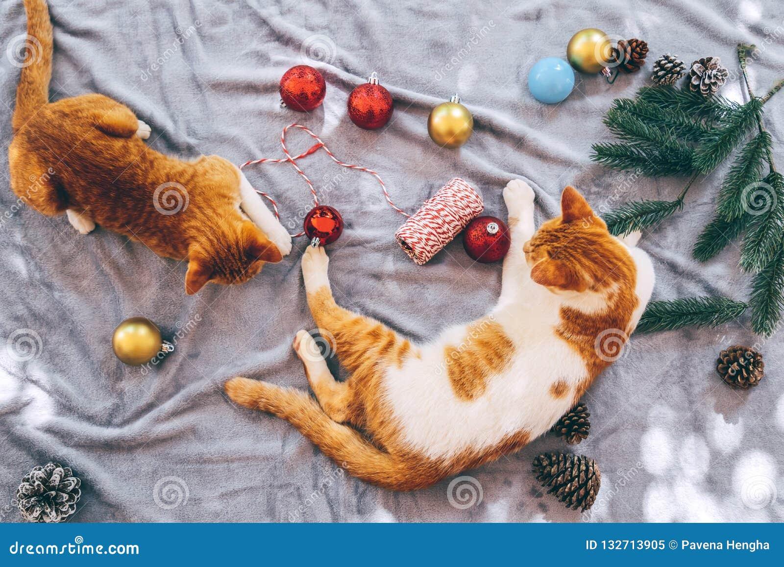 2 оранжевых котят на ковре в празднике рождества с украшением и орнаментом