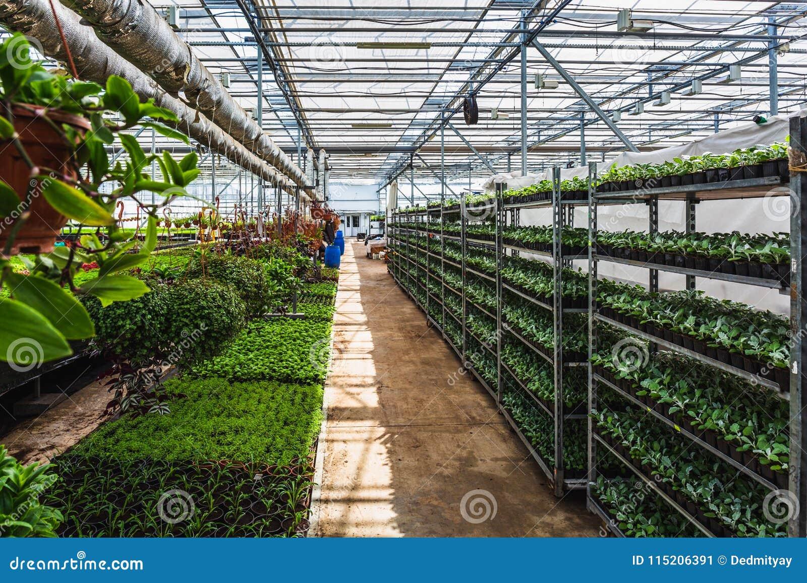 Органическая ферма питомника культивирования орнаментальных заводов Большие современные оранжерея или парник, обрабатывая землю р