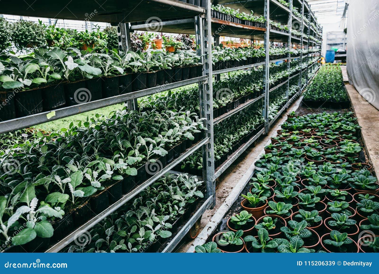Органическая hydroponic ферма питомника культивирования орнаментальных заводов Большие современные оранжерея или парник