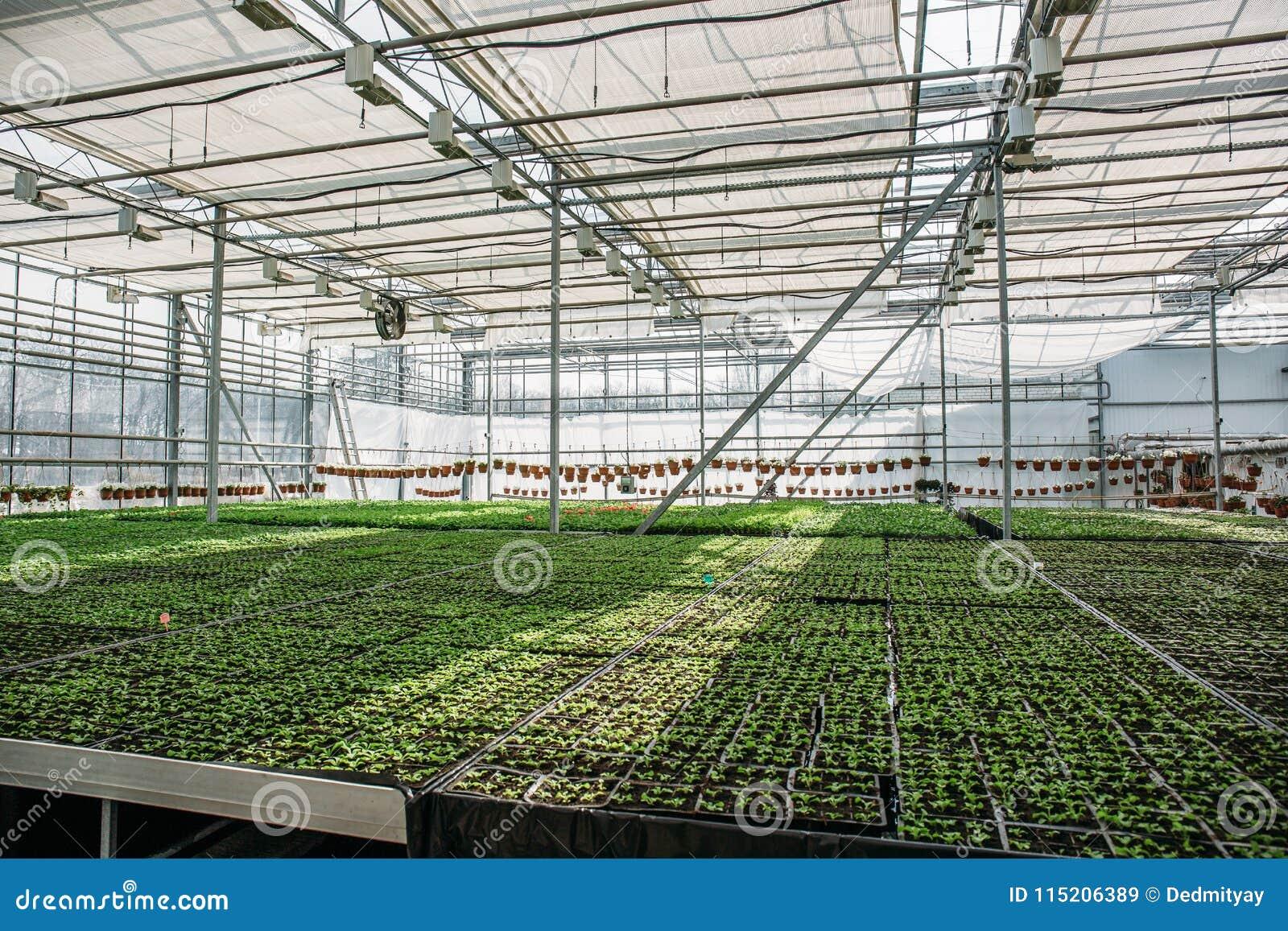 Органическая hydroponic ферма питомника культивирования орнаментальных заводов Большие современные оранжерея или парник, обрабаты
