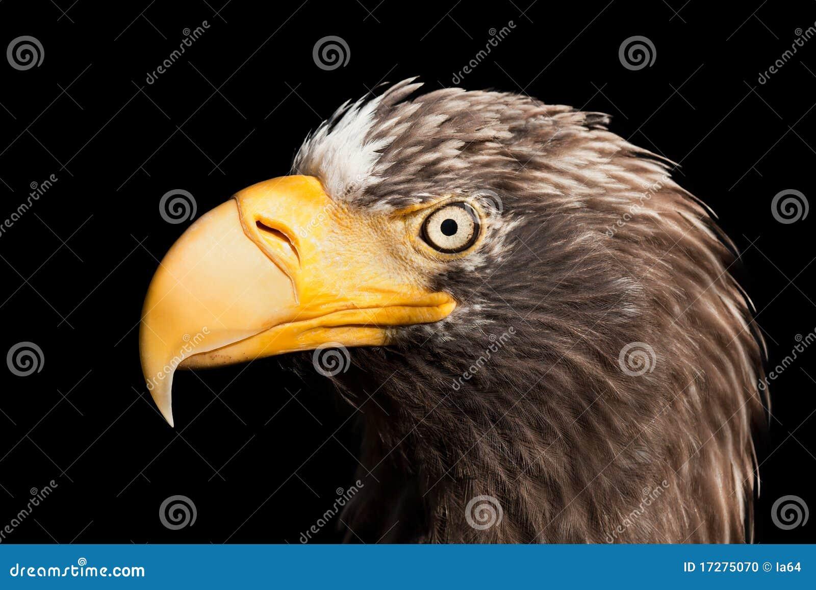 орел птицы