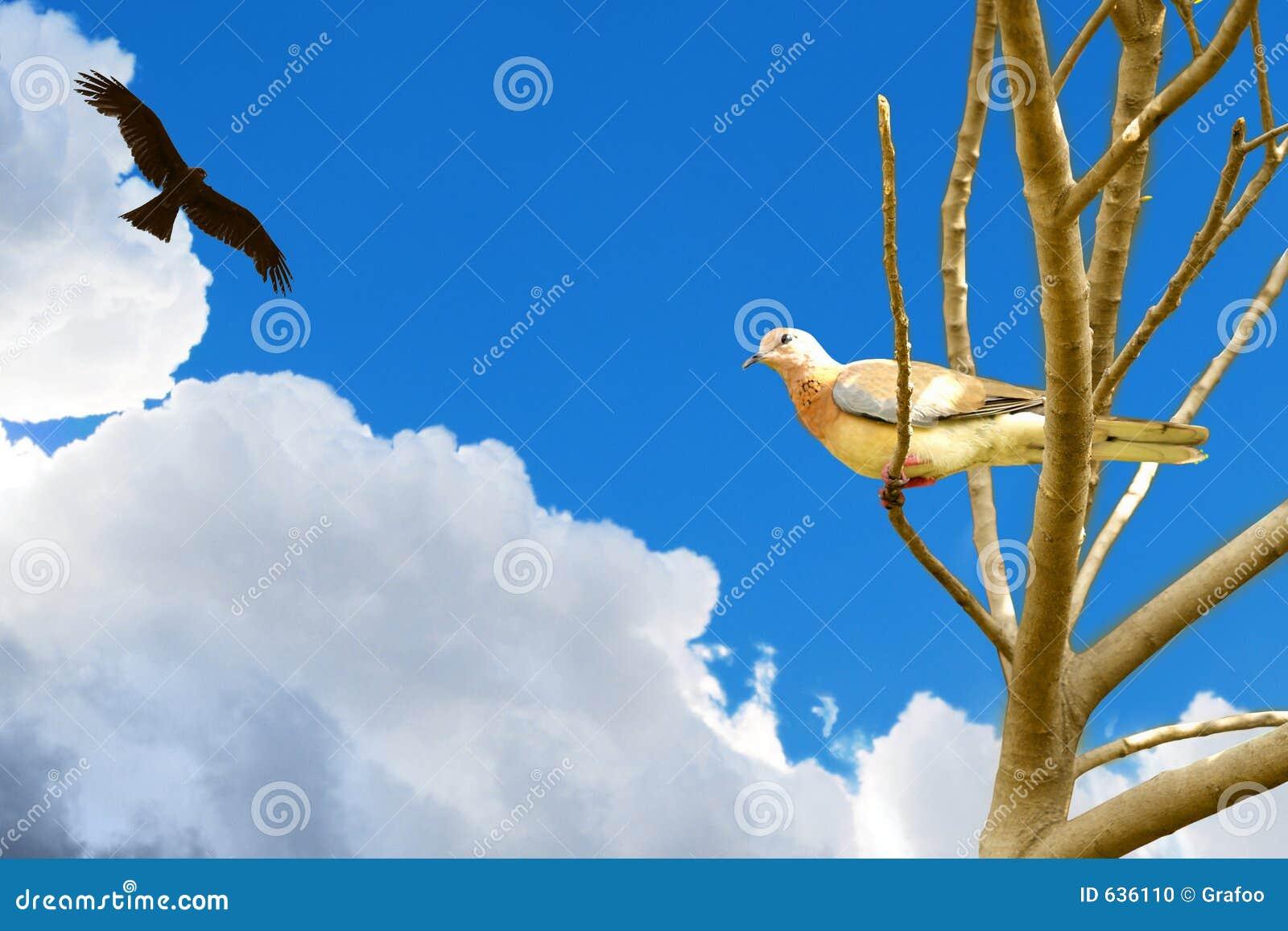 Download орел dove хищничая иллюстрация штока. иллюстрации насчитывающей dove - 636110