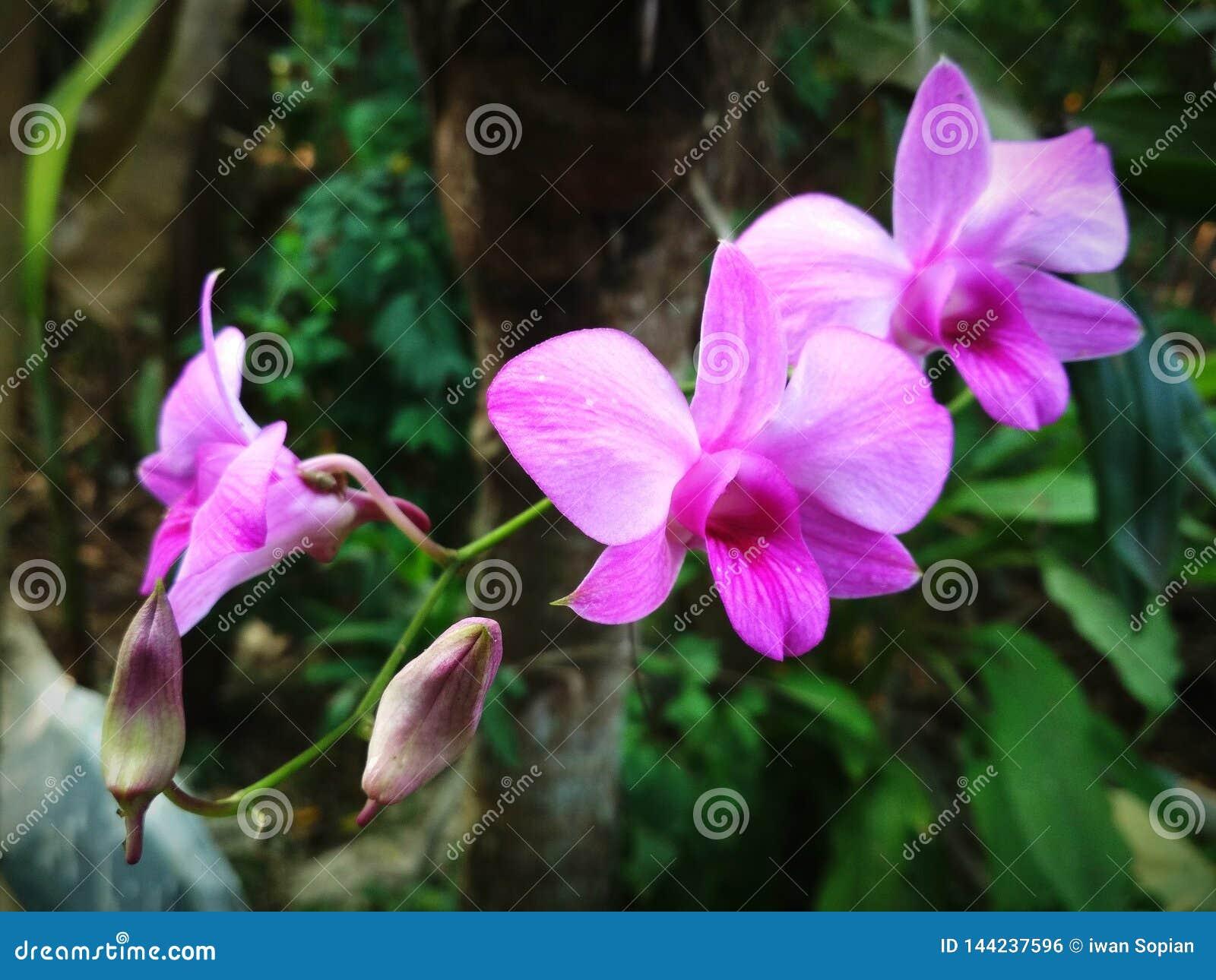 Орхидея в саде