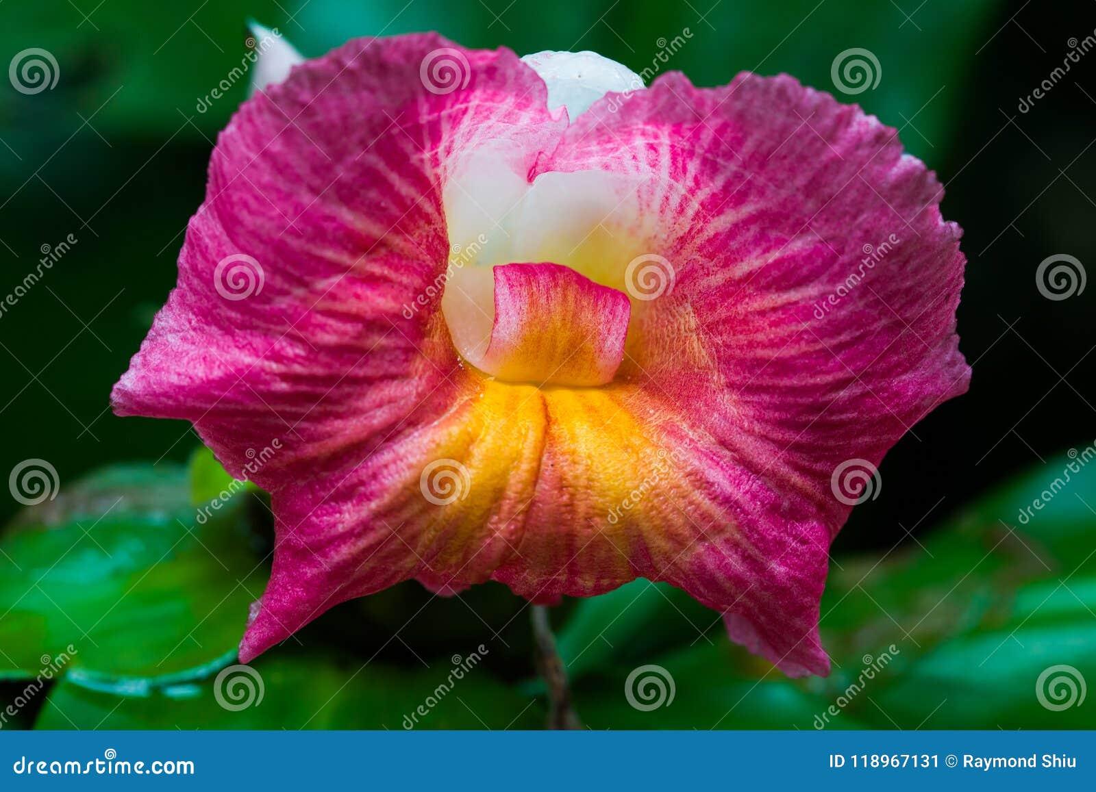 орхидея одичалая