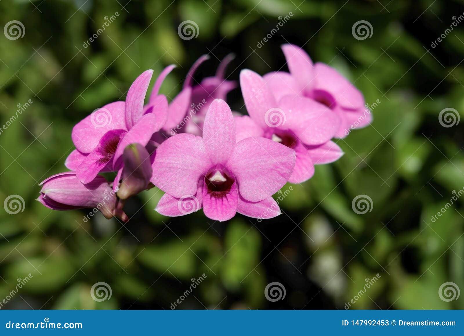 Орхидея, орхидеи, предпосылка, пинк, белый, цветок
