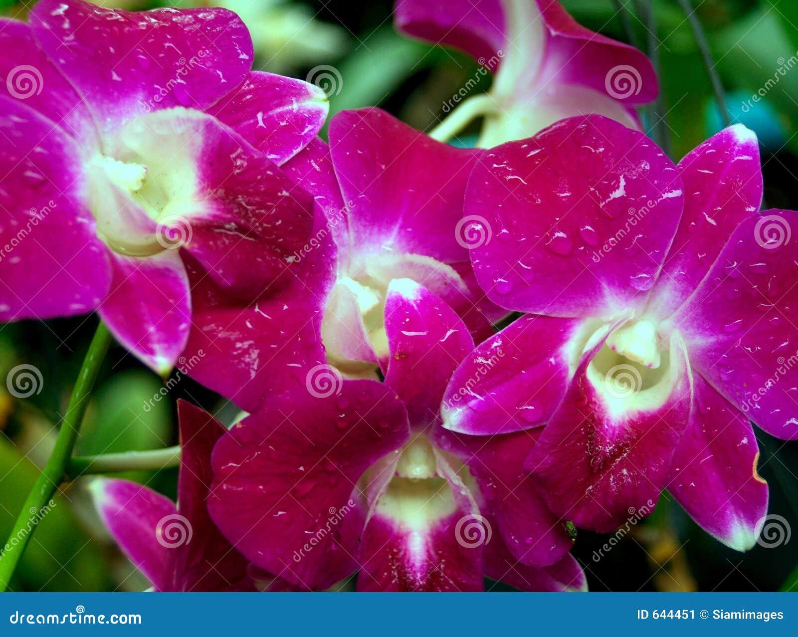 Download орхидея 05 цветков стоковое изображение. изображение насчитывающей детали - 644451