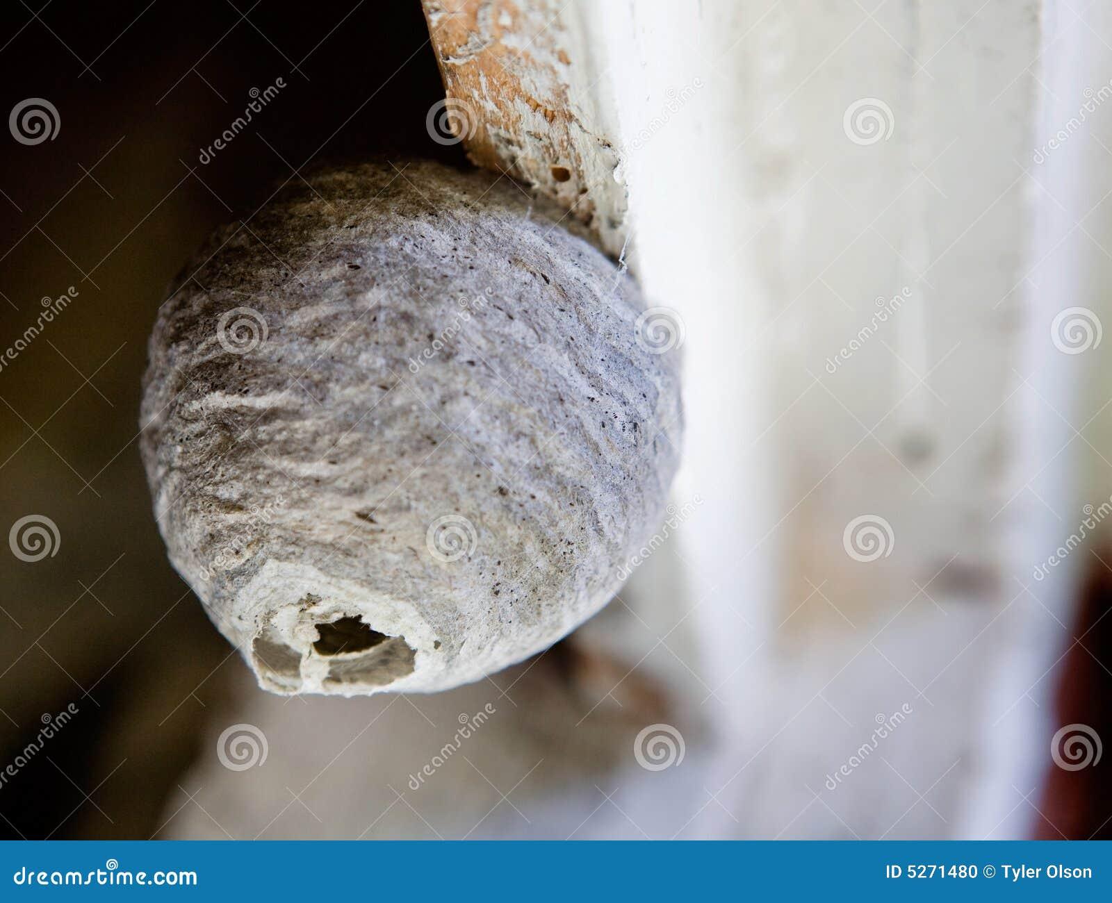 оса гнездя