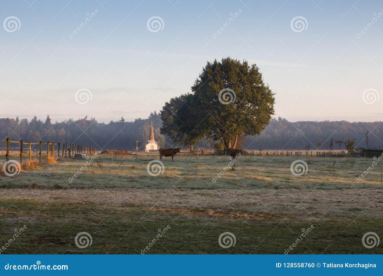 Осеннее захолустное, ландшафт с коровами и белая капелла, в e