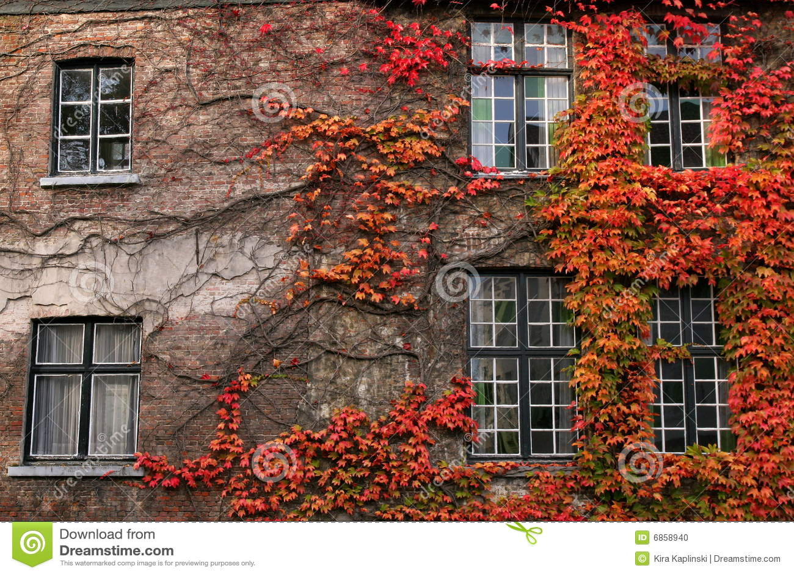 осеннее листво