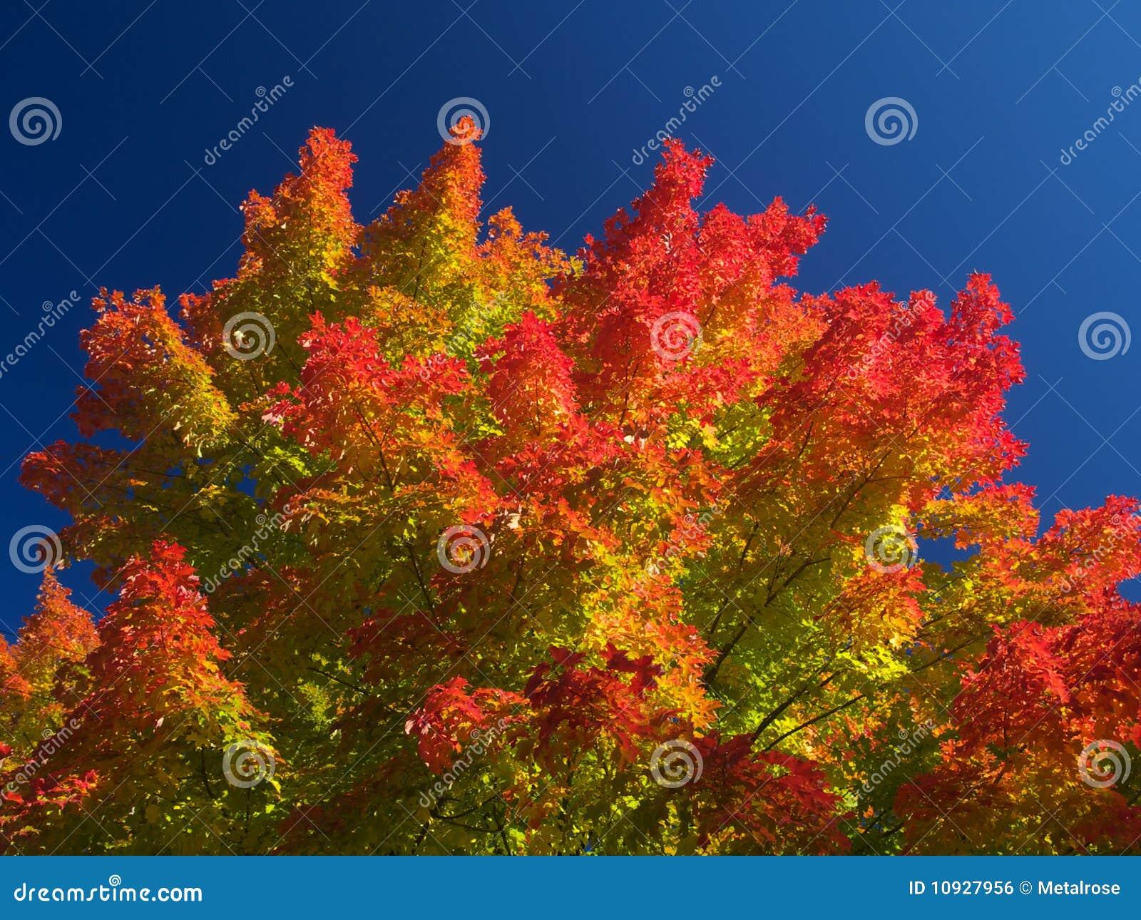 осень красивейшая