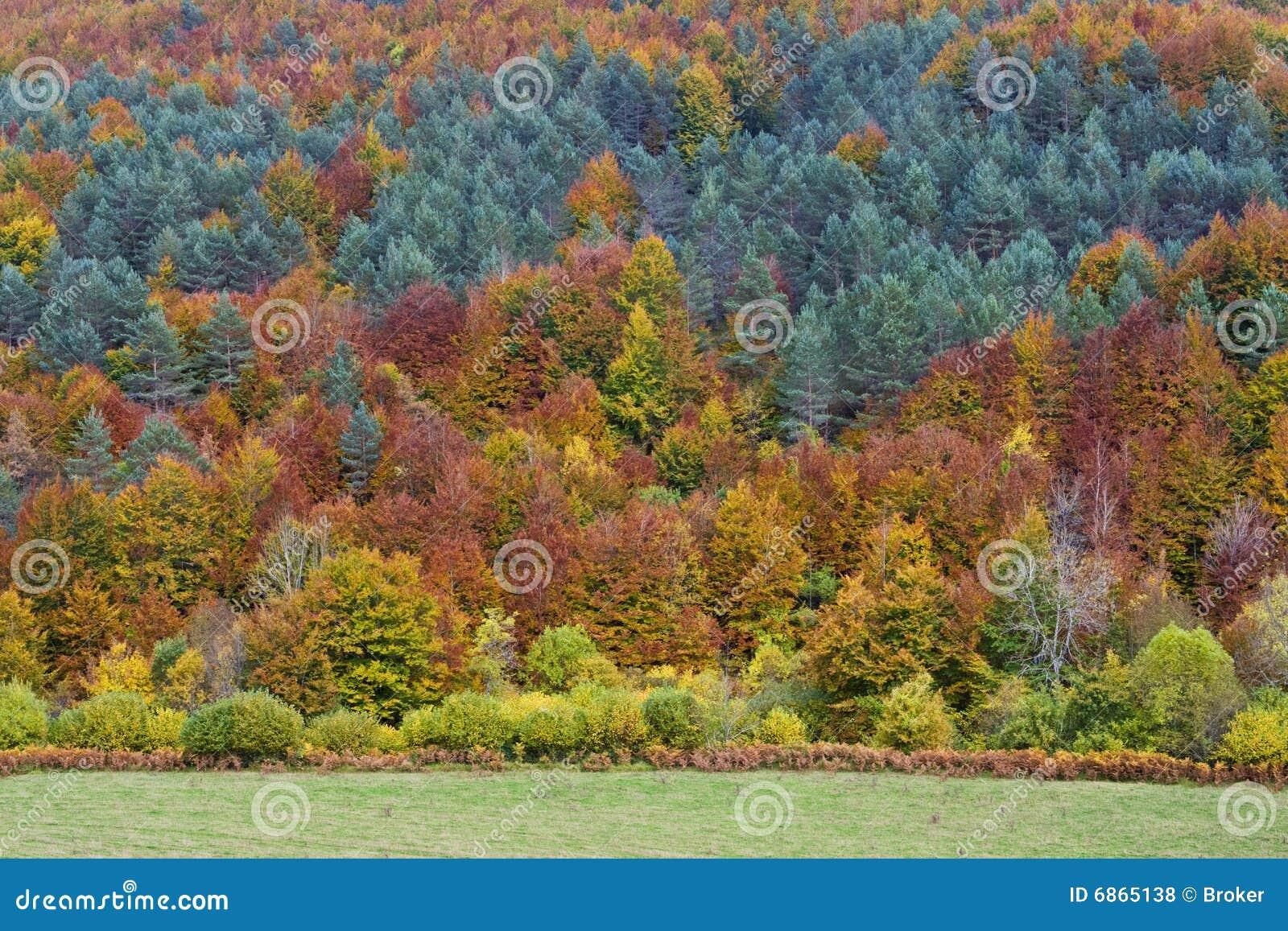 осень красит пущу