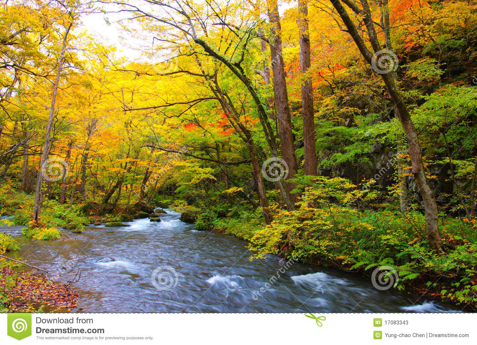 осень красит реку oirase