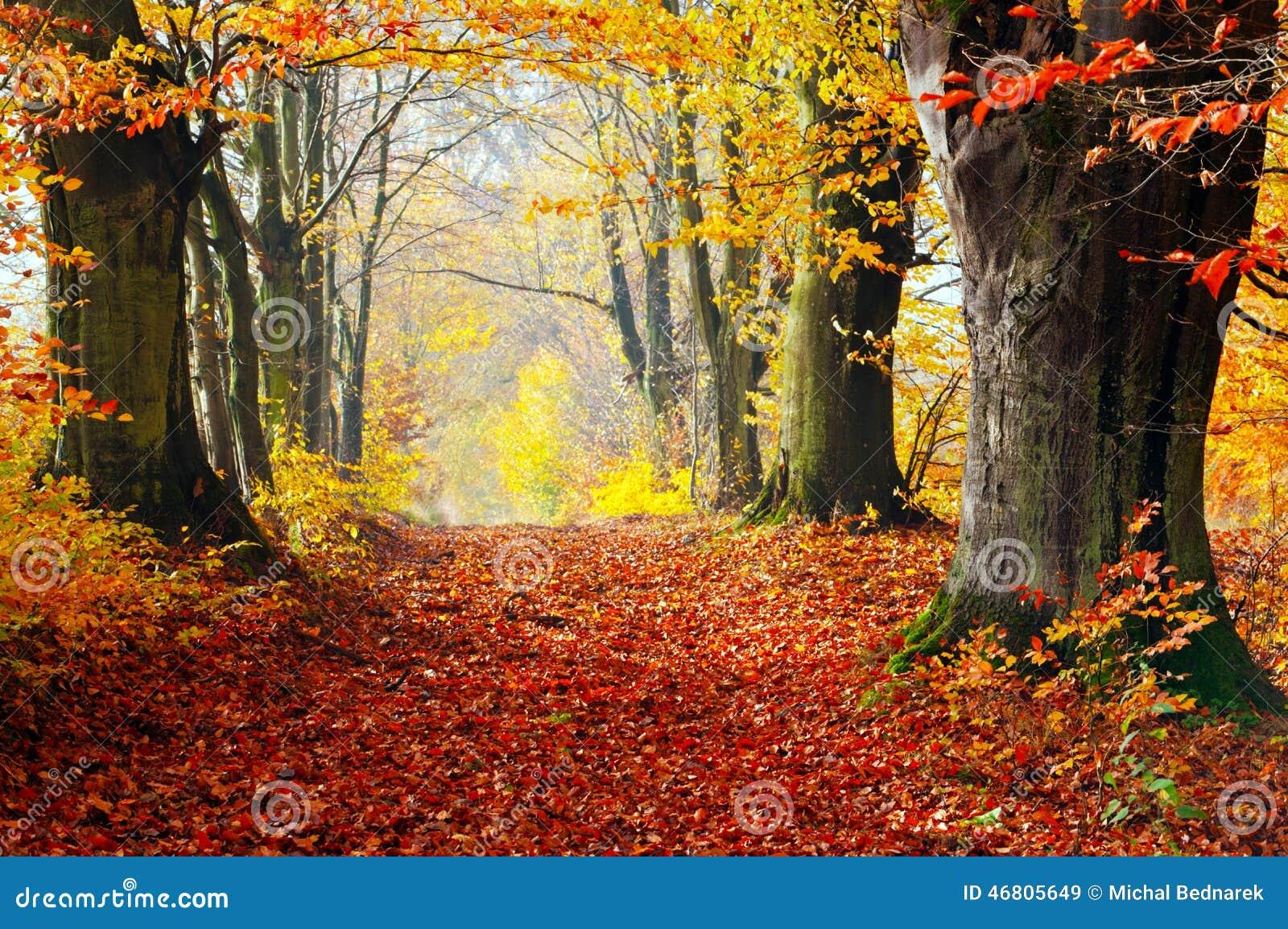 Осень, путь леса падения красного цвета выходит к свету