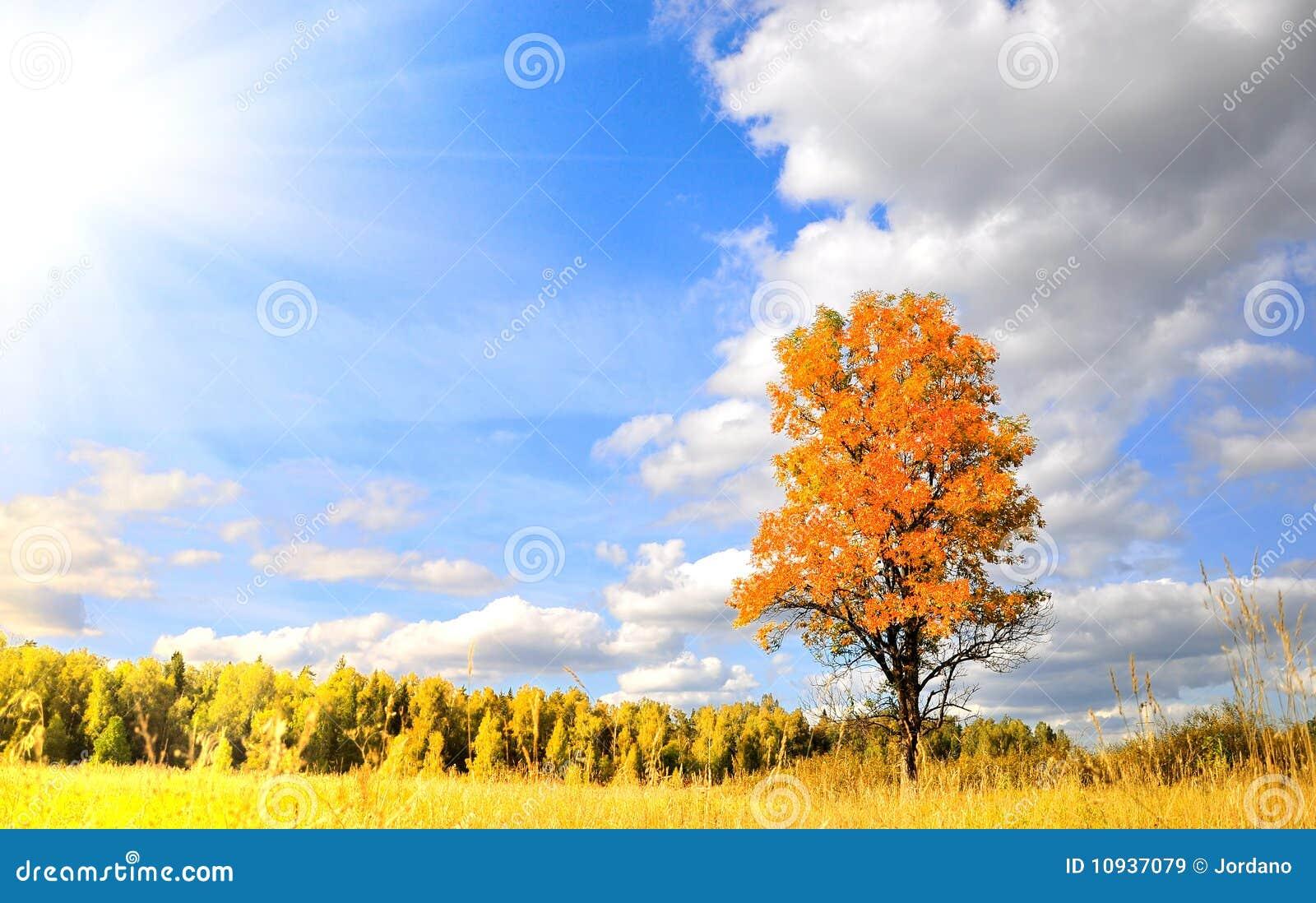 осень чудесная