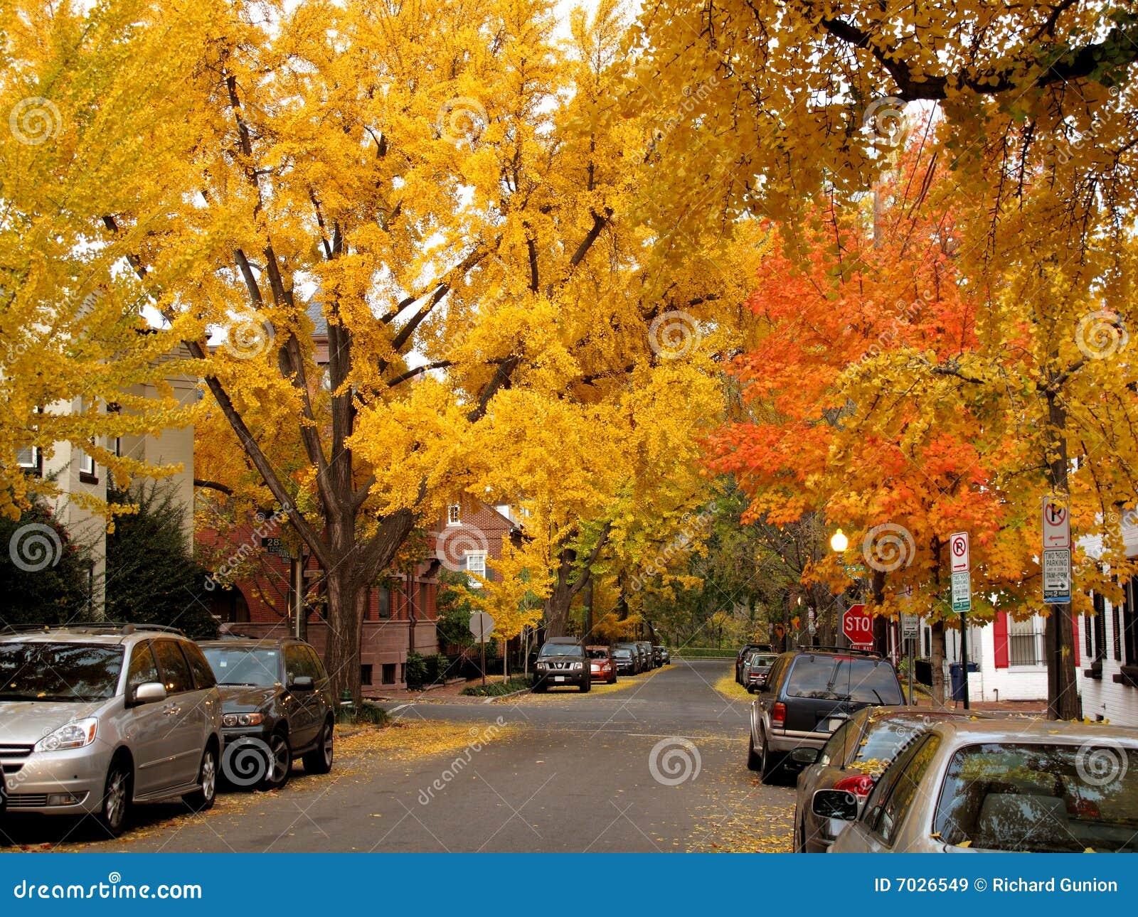 осень georgetown золотистый