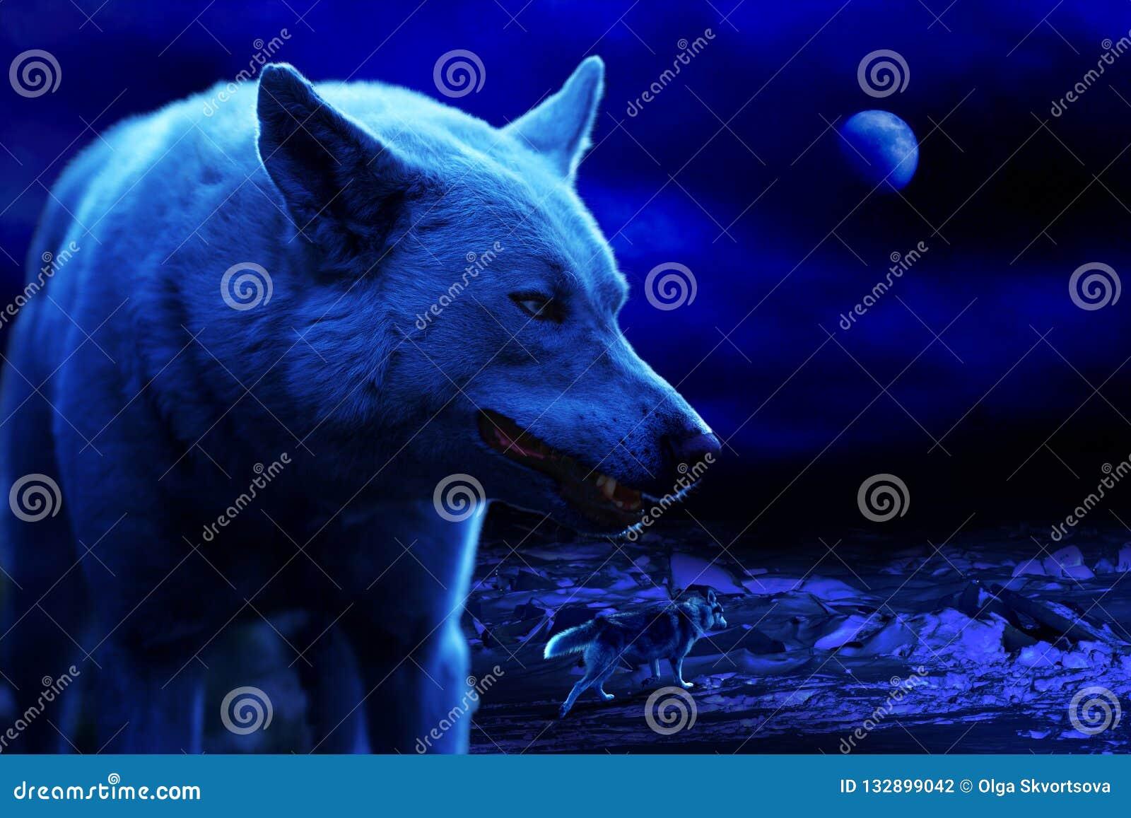 Оскалы белого волка вечером среди торошений льда