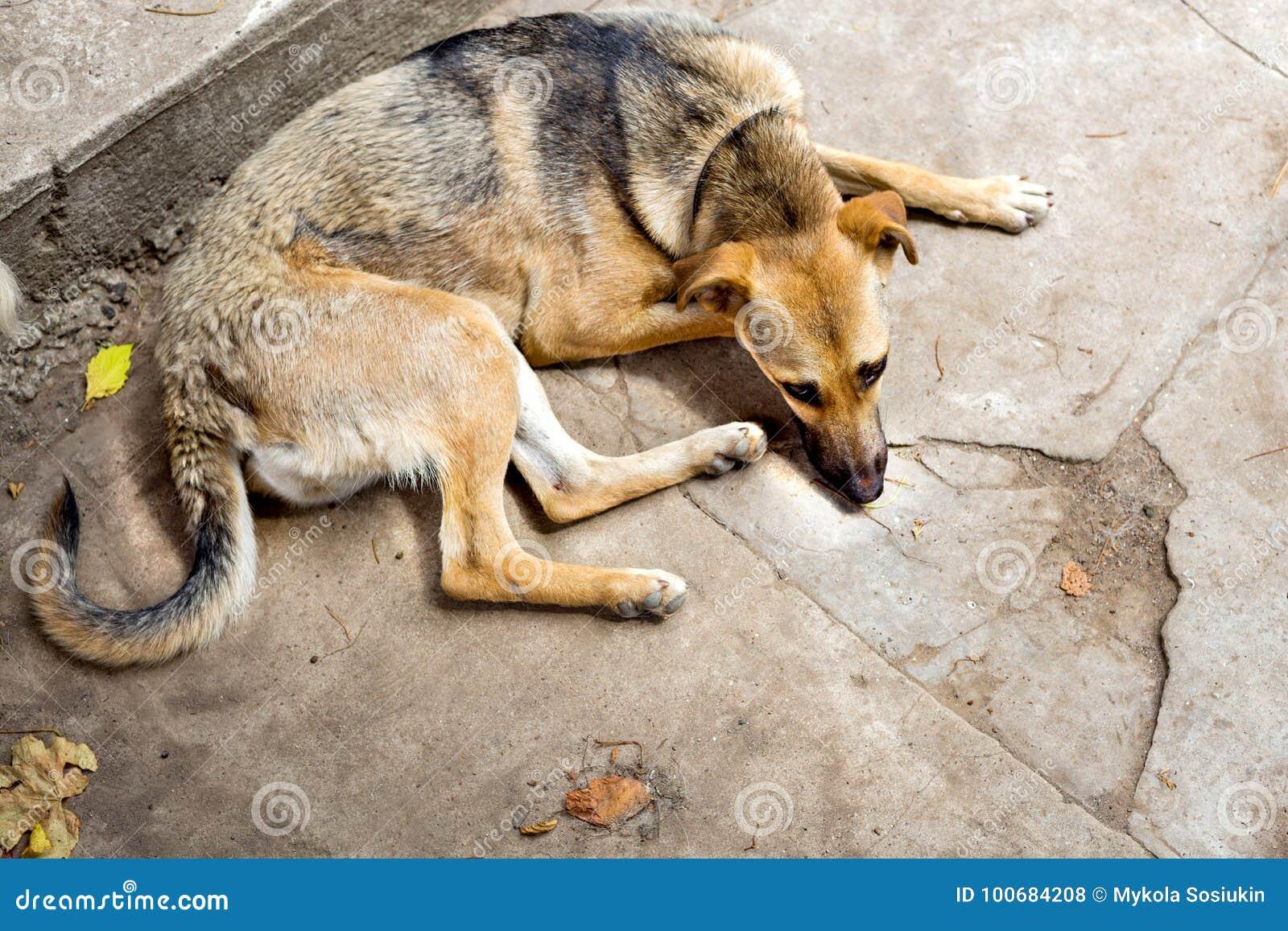 Ослабленная бездомная собака от укрытия выслеживает homeless Селективный фокус
