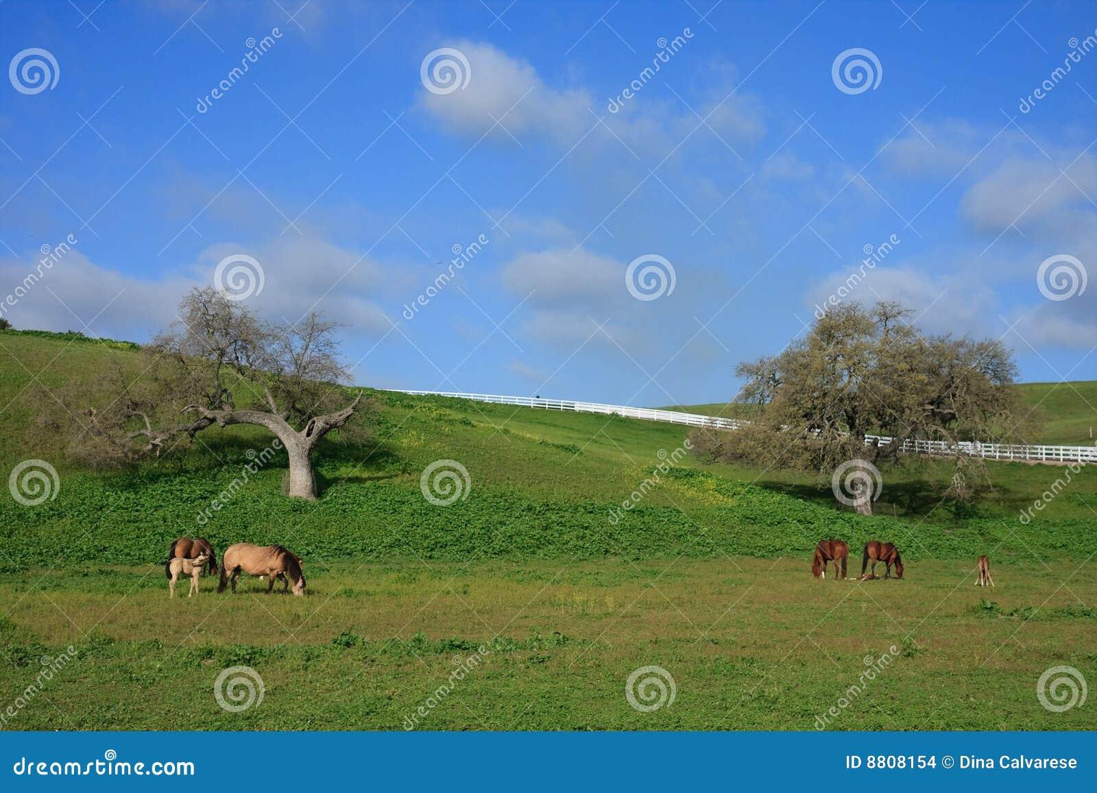 ослята сельской местности пася выгон конематок